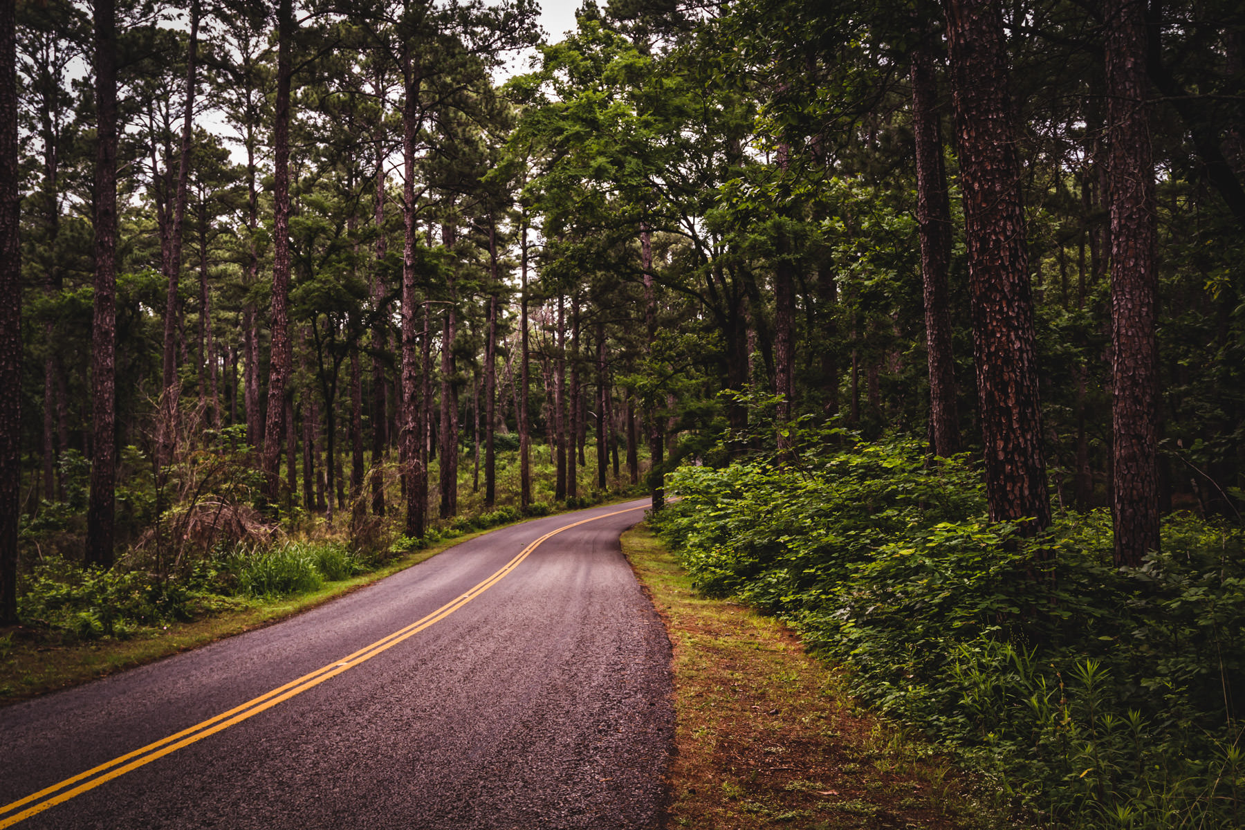 A road winds through the forest at Tyler State Park, Texas.