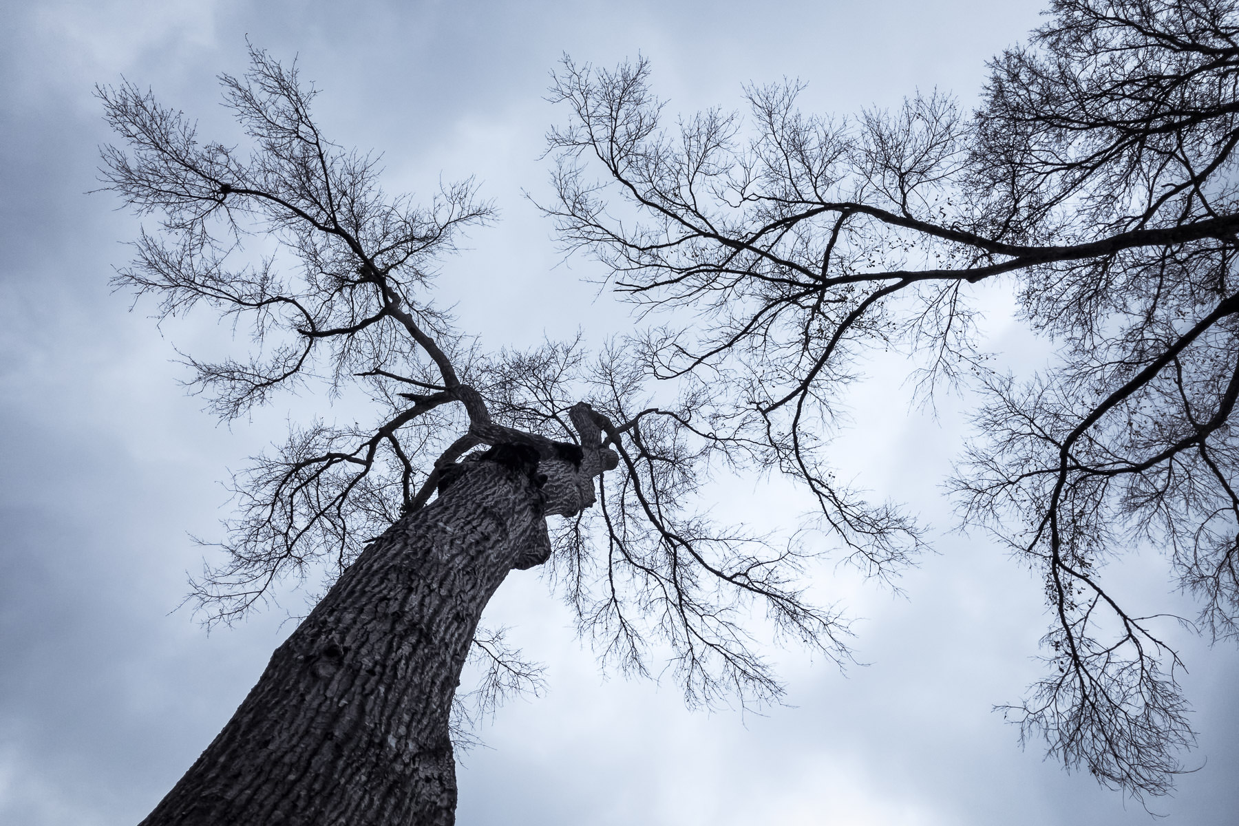 Trees, stripped of their leaves, reach into the cold winter sky over Tyler, Texas.
