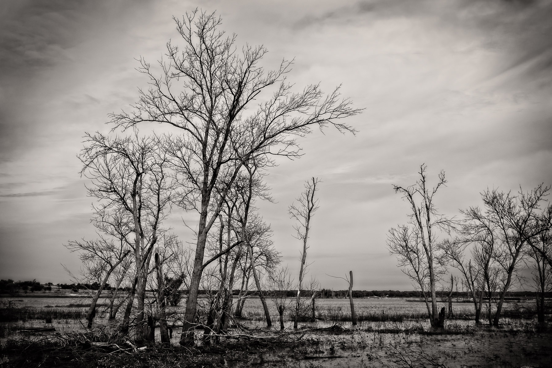 Trees grow in the shallow marshes of North Texas' Hagerman National Wildlife Refuge.
