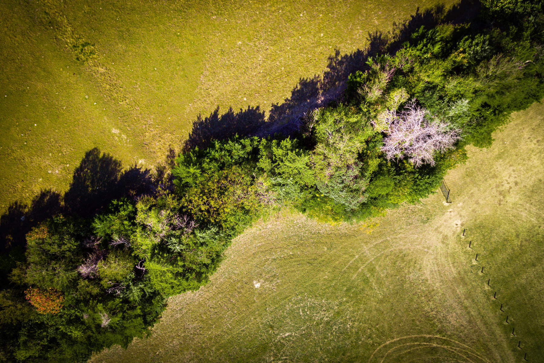 An aerial view of a tree line in Erwin Park, McKinney, Texas.