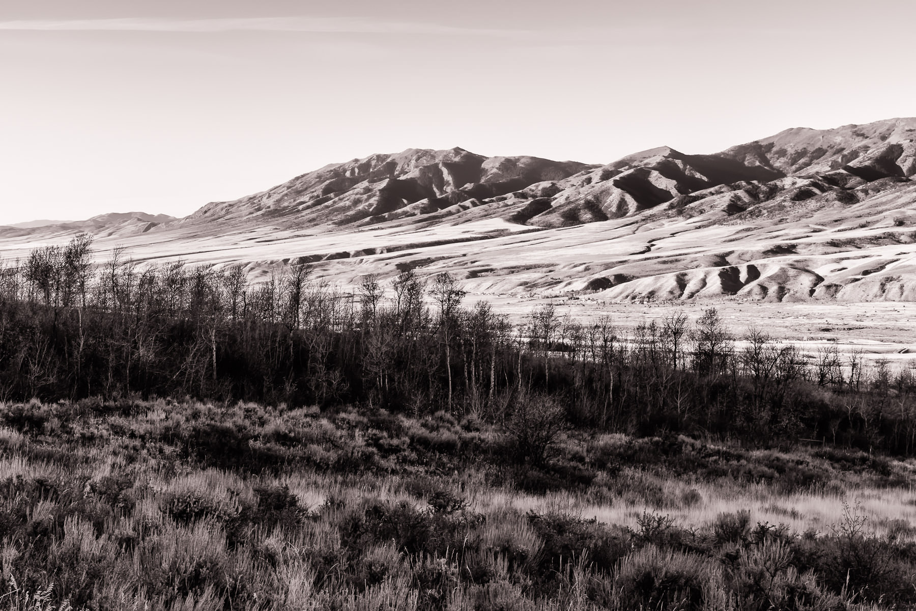 Trees grow in the mountainous landscape near Pocatello, Idaho.