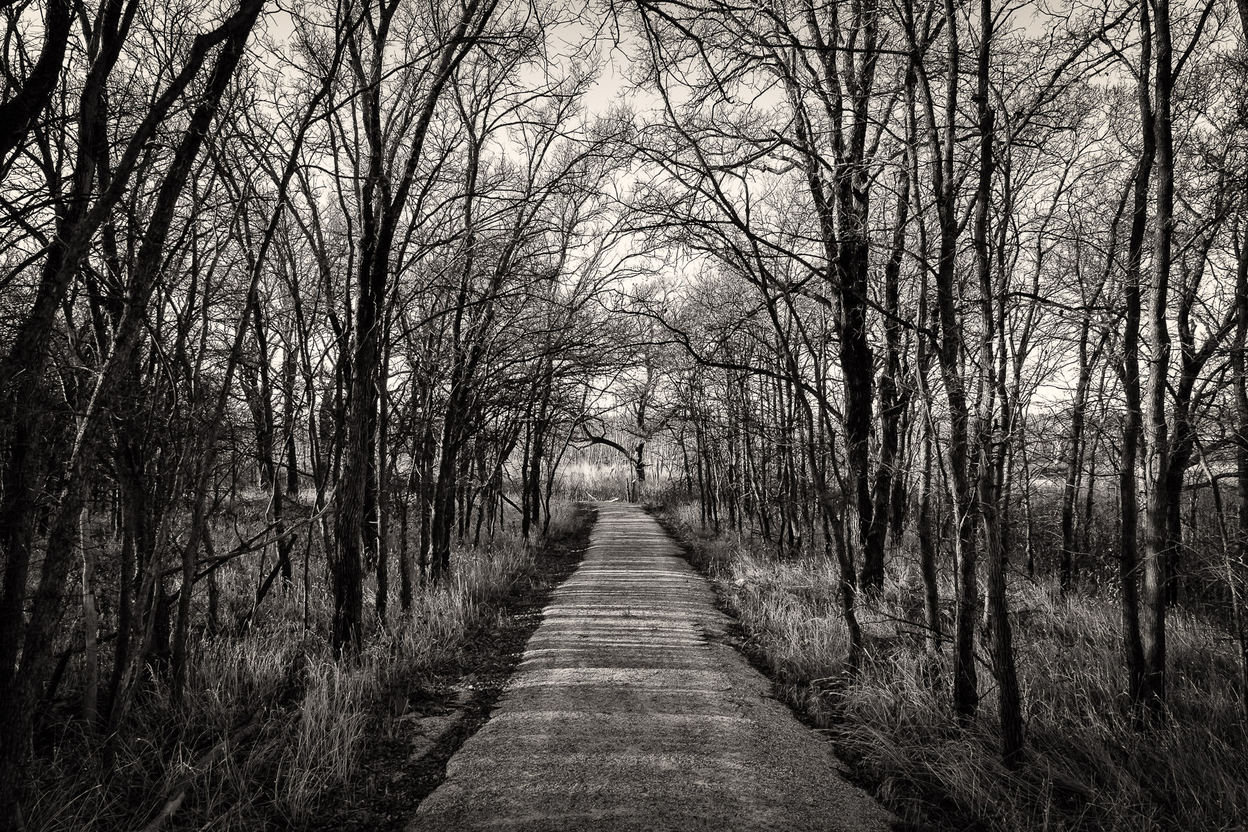 A path winds through the forest at Texas' Hagerman National Wildlife Refuge.