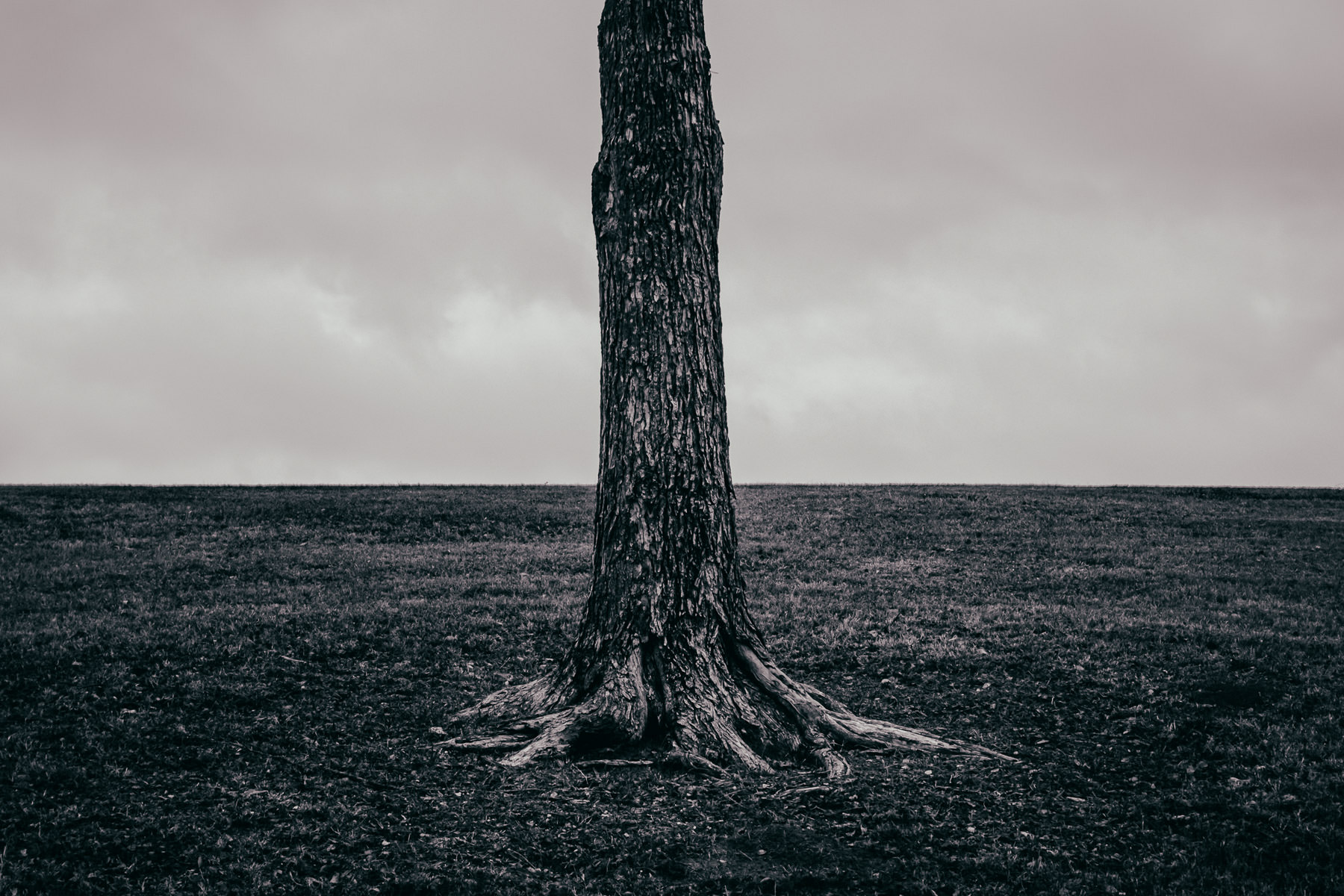 The trunk of a lone tree in Richardson, Texas' Breckinridge Park.
