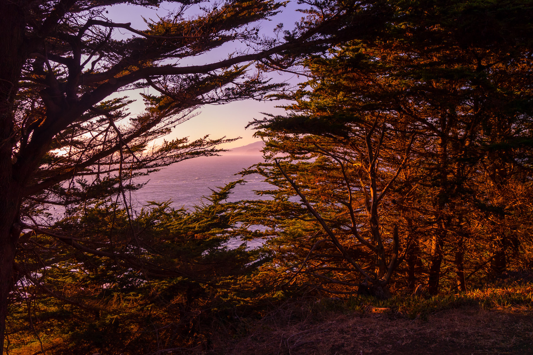 Trees overlook the Pacific Ocean along the California Coastal Trail near Lands End.