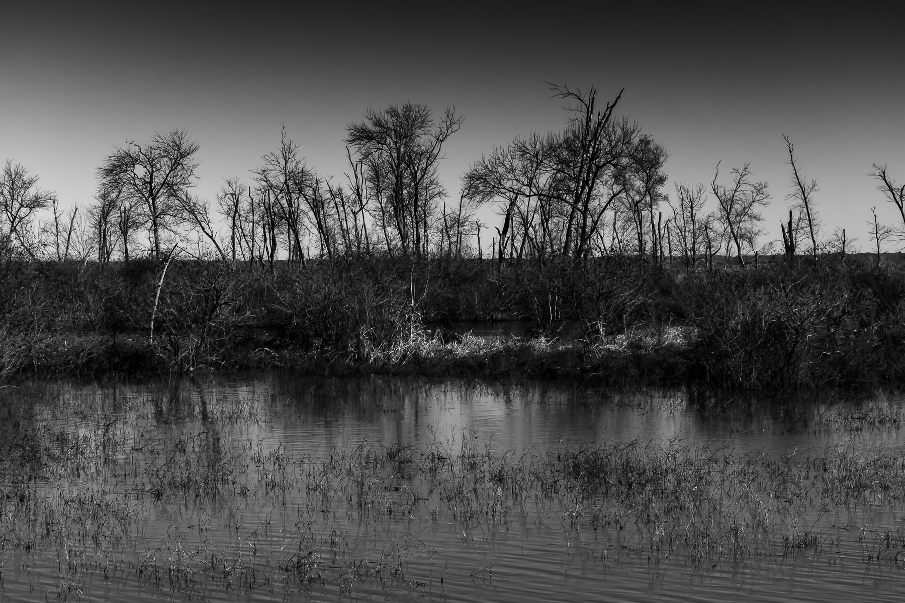 Trees along the shore of Harris Creek at the Hagerman National Wildlife Refuge, Texas.