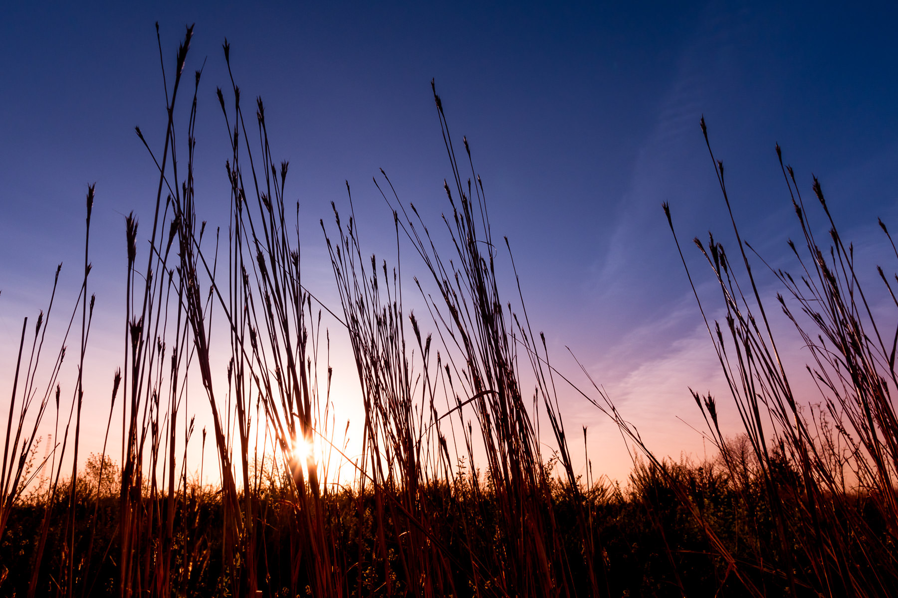 The sun rises on tall grass at Fort Worth, Texas' Tandy Hills Natural Area.