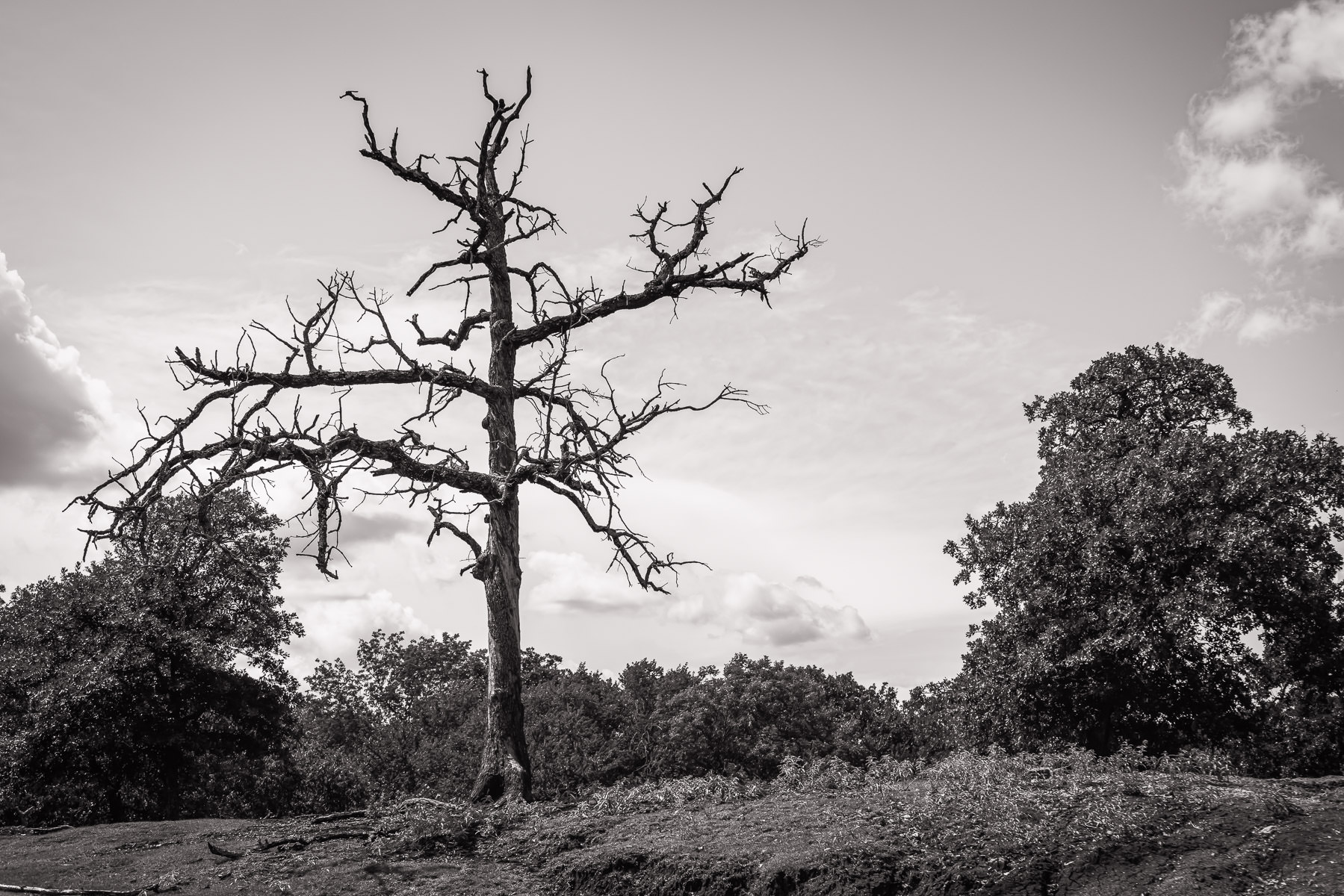 A barren tree rises into the Oklahoma sky at Arbuckle Wilderness.