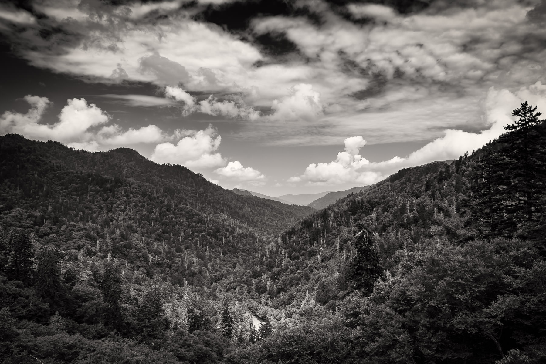 The tree-covered mountains of the Great Smoky Mountains National Park stretch into the distance.
