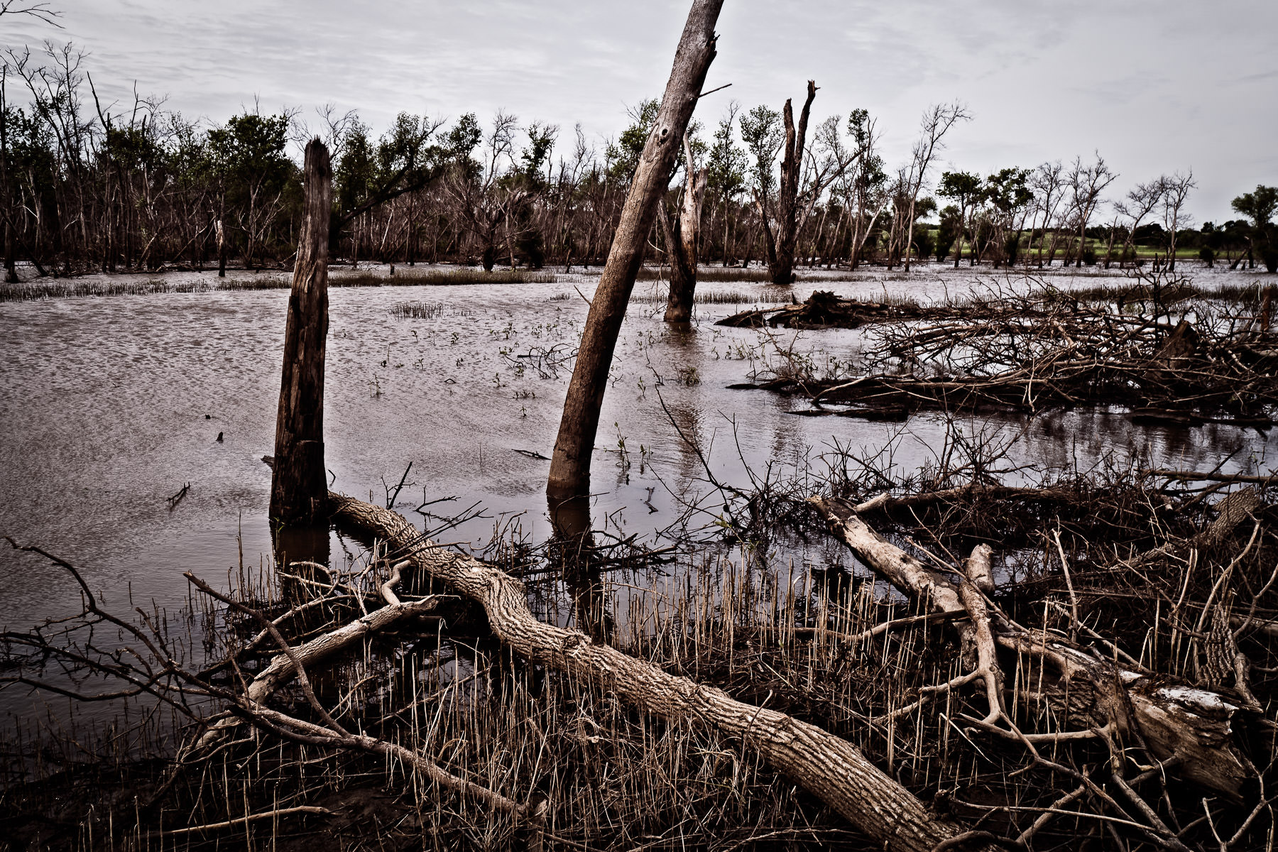 Dead trees decay in the swampy waters at the Hagerman National Wildlife Refuge, Texas.