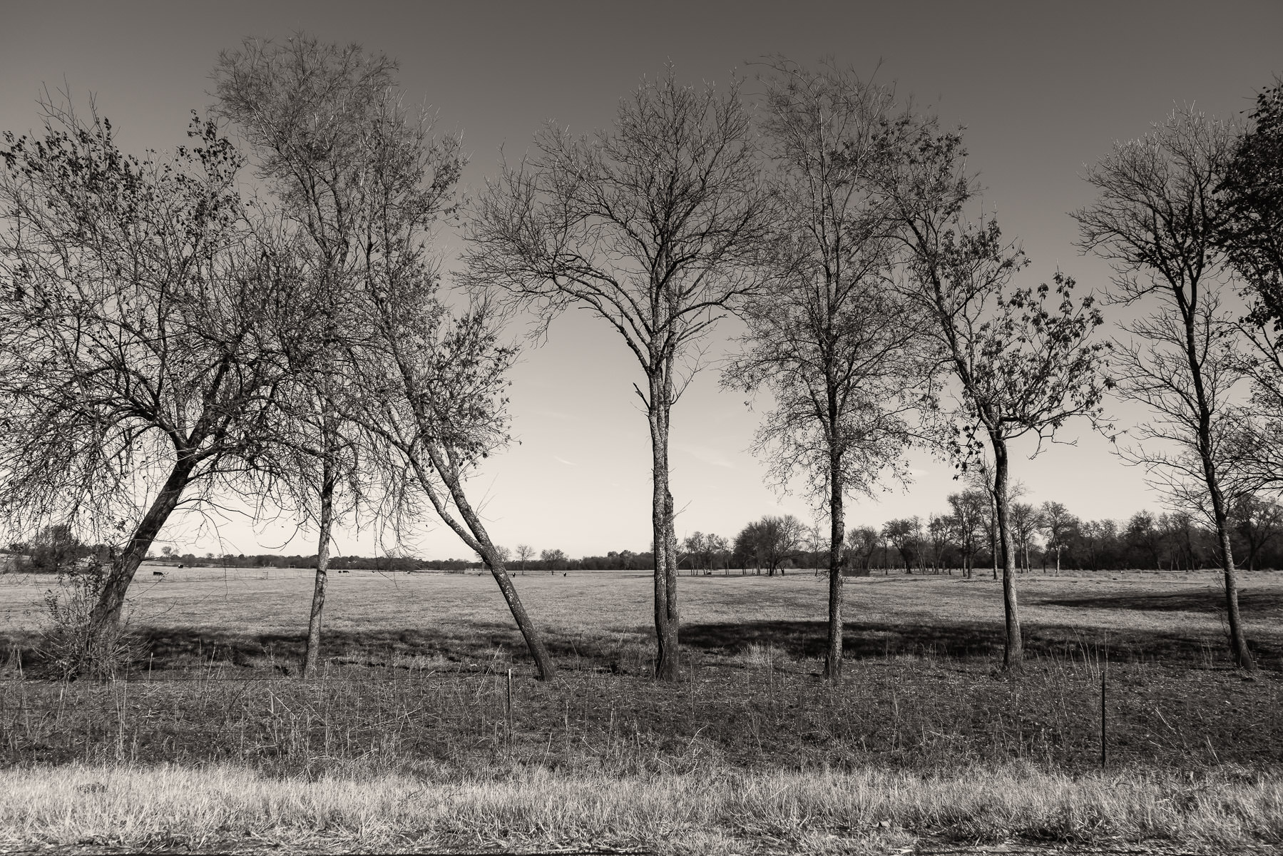 Trees grow along the edge of a farm field near Blue Ridge, Texas.