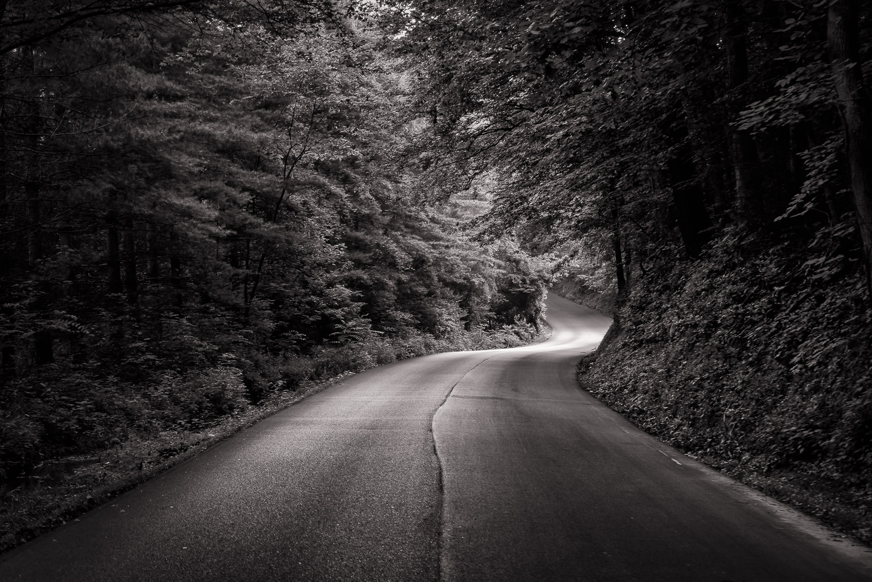 A road winds through the Tennessee forest near Pigeon Forge.