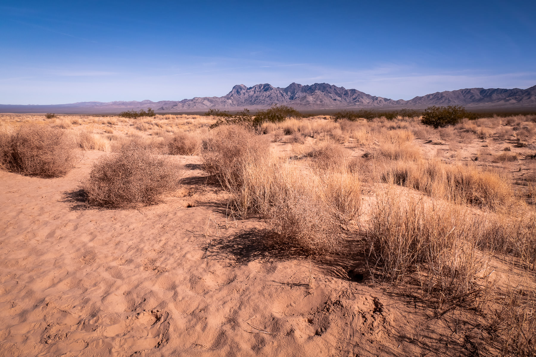The arid landscape of California's Mojave National Preserve.