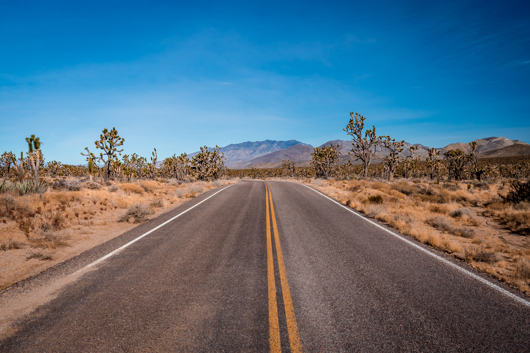 A lonely highway leads through the Joshua Trees of California's Mojave National Preserve.