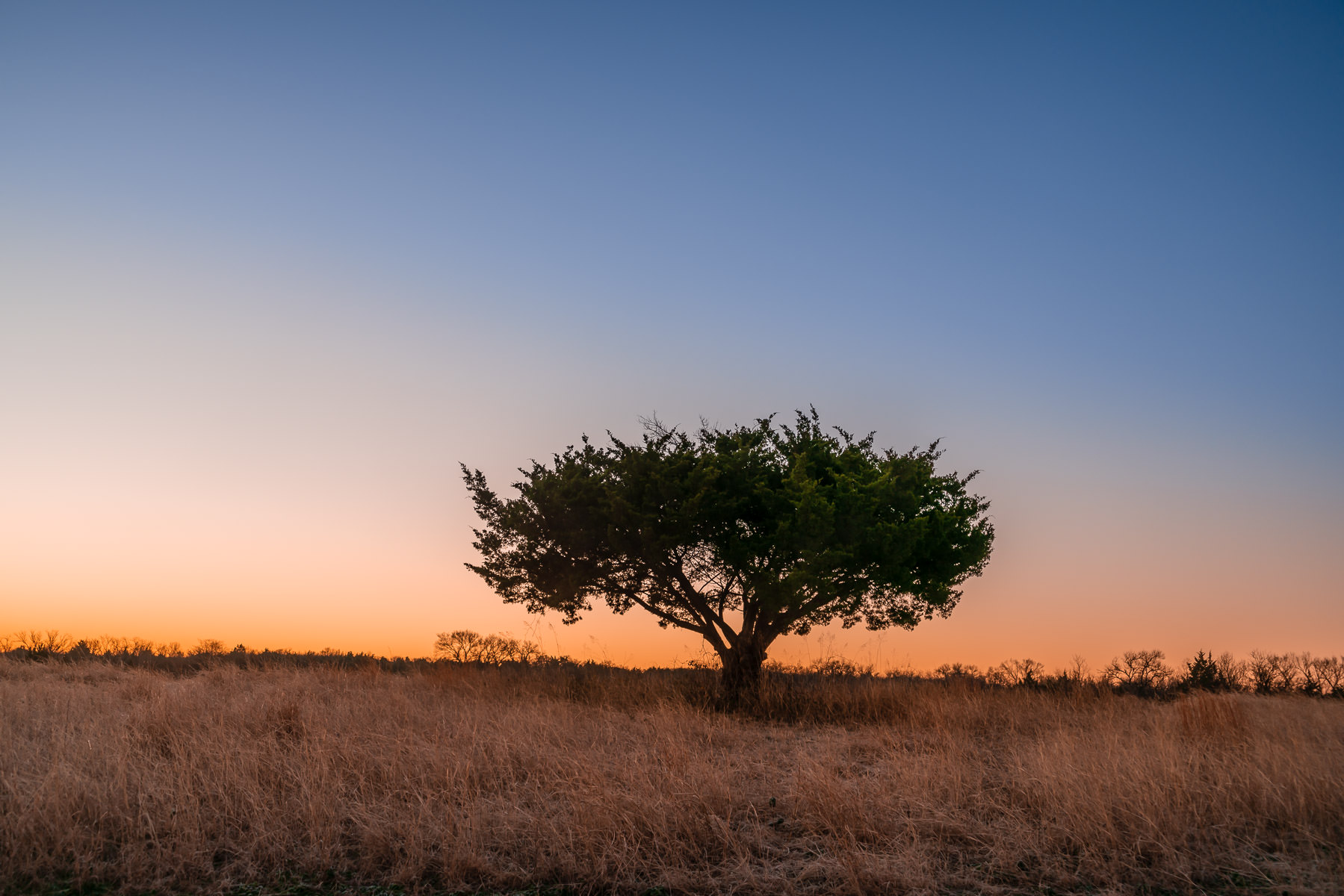 The first light of dawn illuminates a tree at McKinney, Texas' Erwin Park.