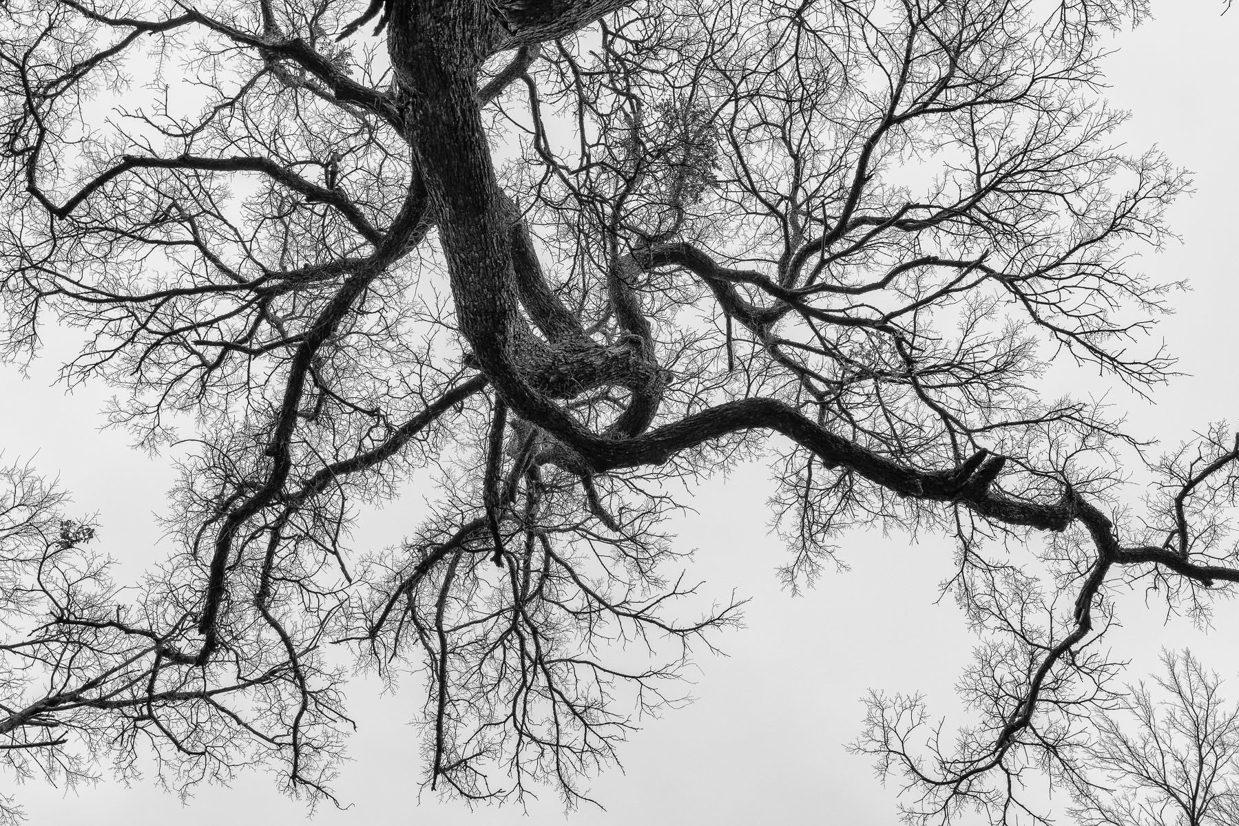 A tree and its branches reach into the sky at the Lewisville Lake Environmental Learning Area, Texas.
