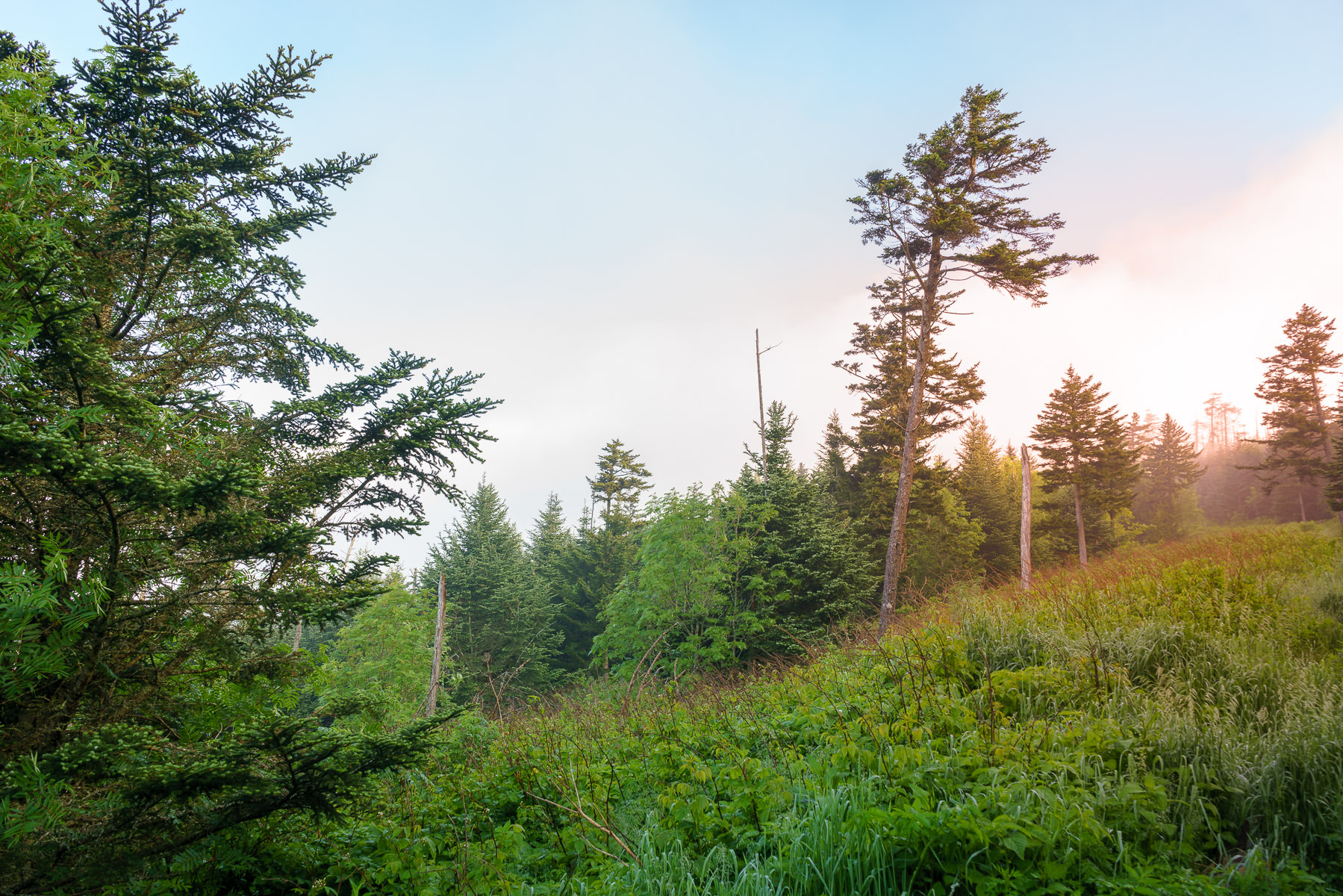 The sun rises on the slopes of Clingmans Dome in the Great Smoky Mountains National Park, Tennessee.
