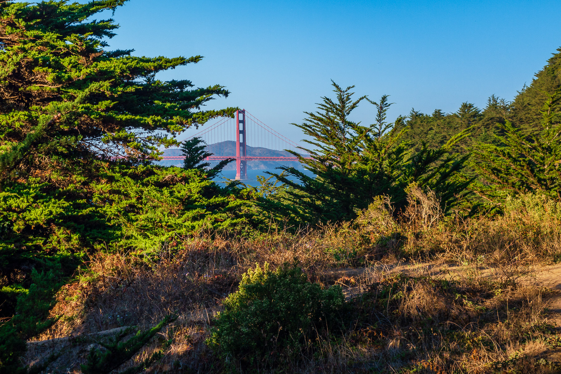 San Francisco's iconic Golden Gate Bridge, as seen from through the trees along nearby Sea Cliff.
