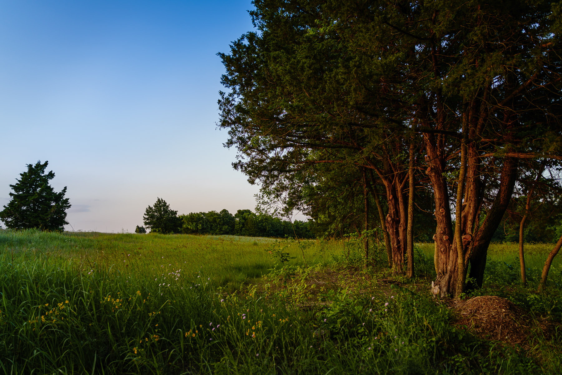 The last light of day illuminates Erwin Park near McKinney, Texas.