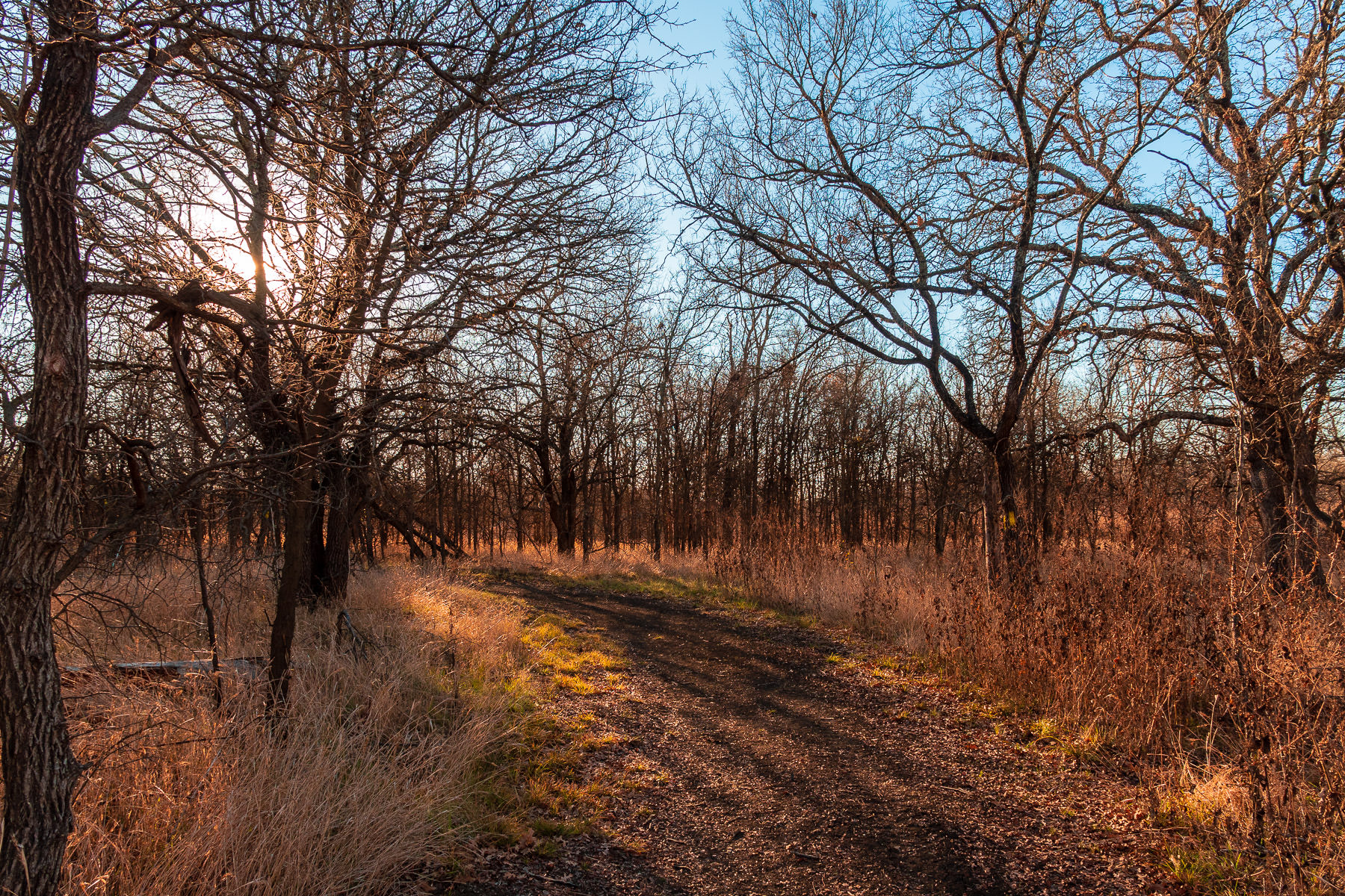 The morning sun filters through trees at Texas' Hagerman National Wildlife Refuge.