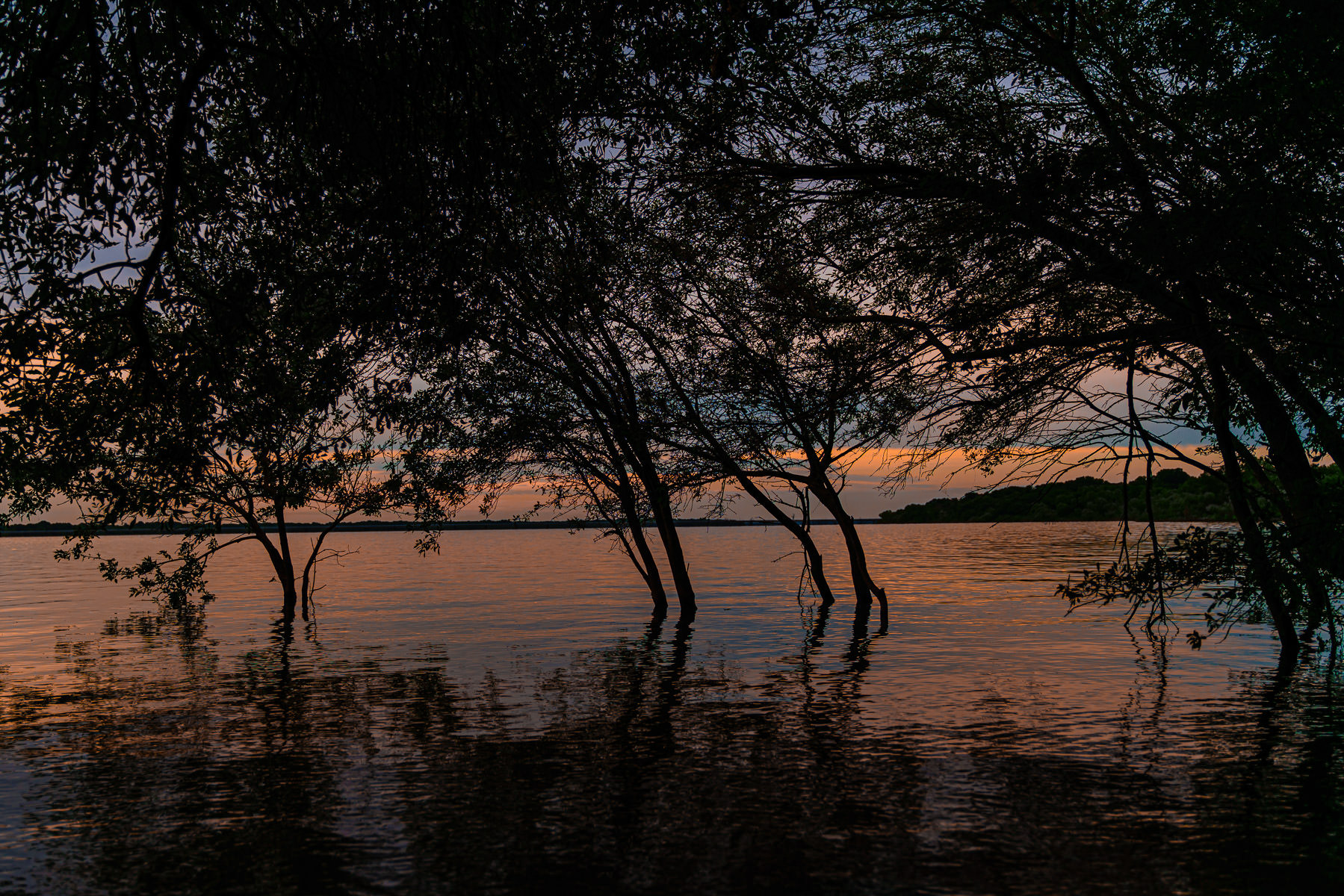 The morning sun silhouettes trees growing along the shore of Texas' Lake Lavon.