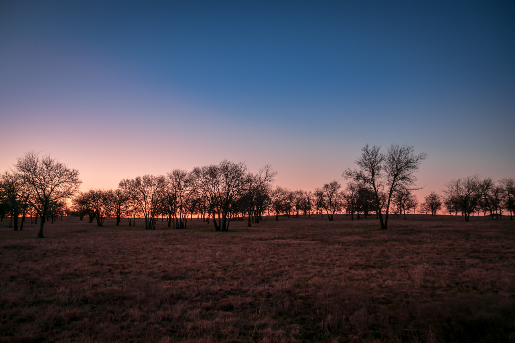 Trees in a field near Sherman, Texas, greet the dawn.