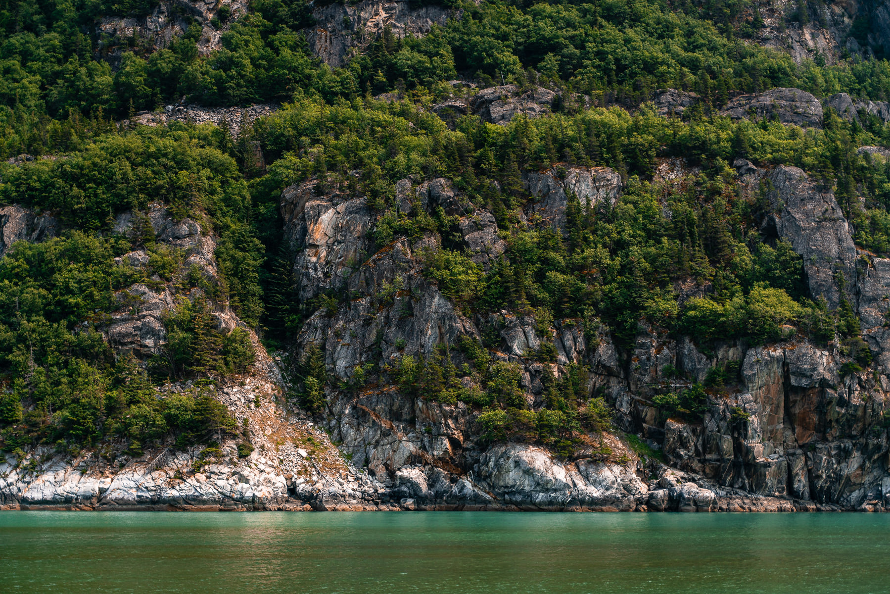 Trees grow along the cliff walls of Alaska's Taiya Inlet near Skagway.