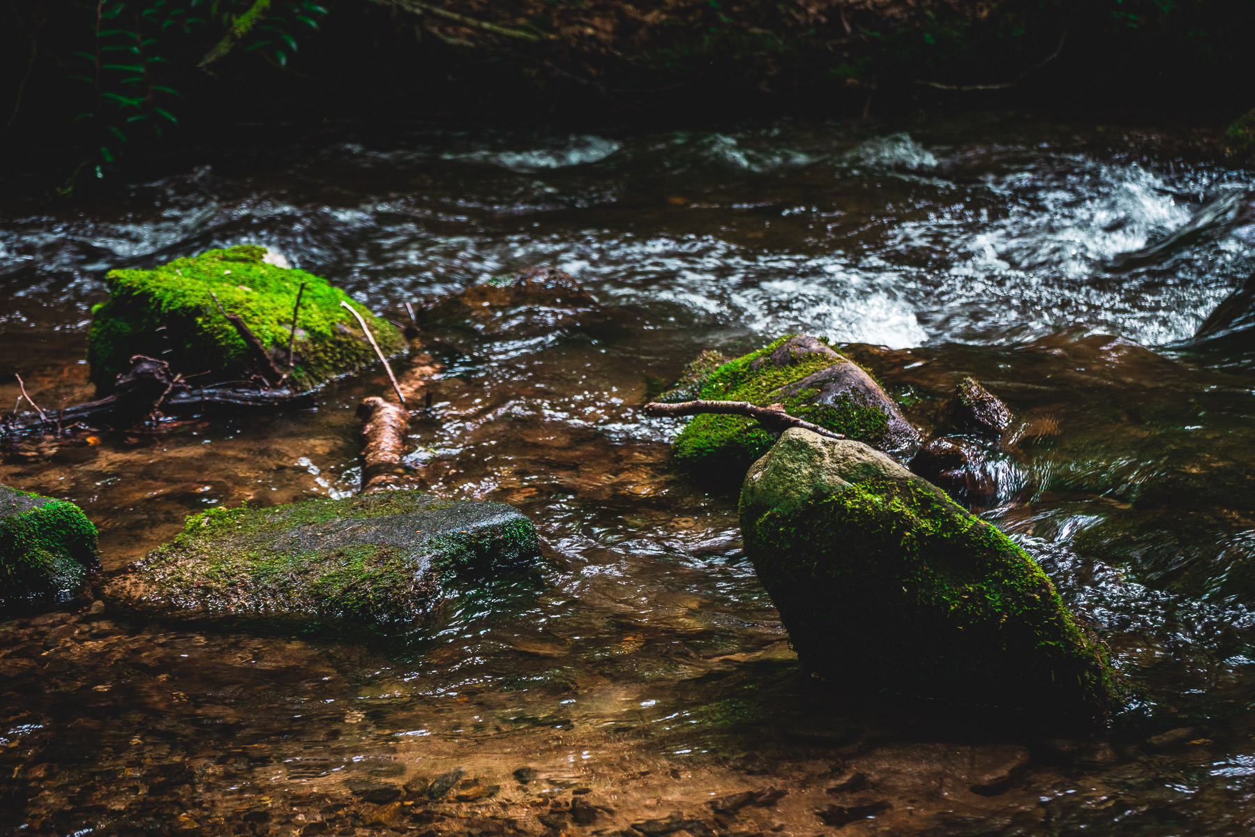 Moss-covered rocks in a stream at the Great Smoky Mountains National Park, Tennessee.