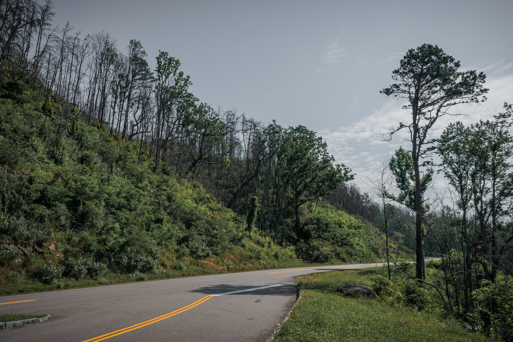A road winds through the mountainside trees of Tennessee's Great Smoky Mountains National Park.