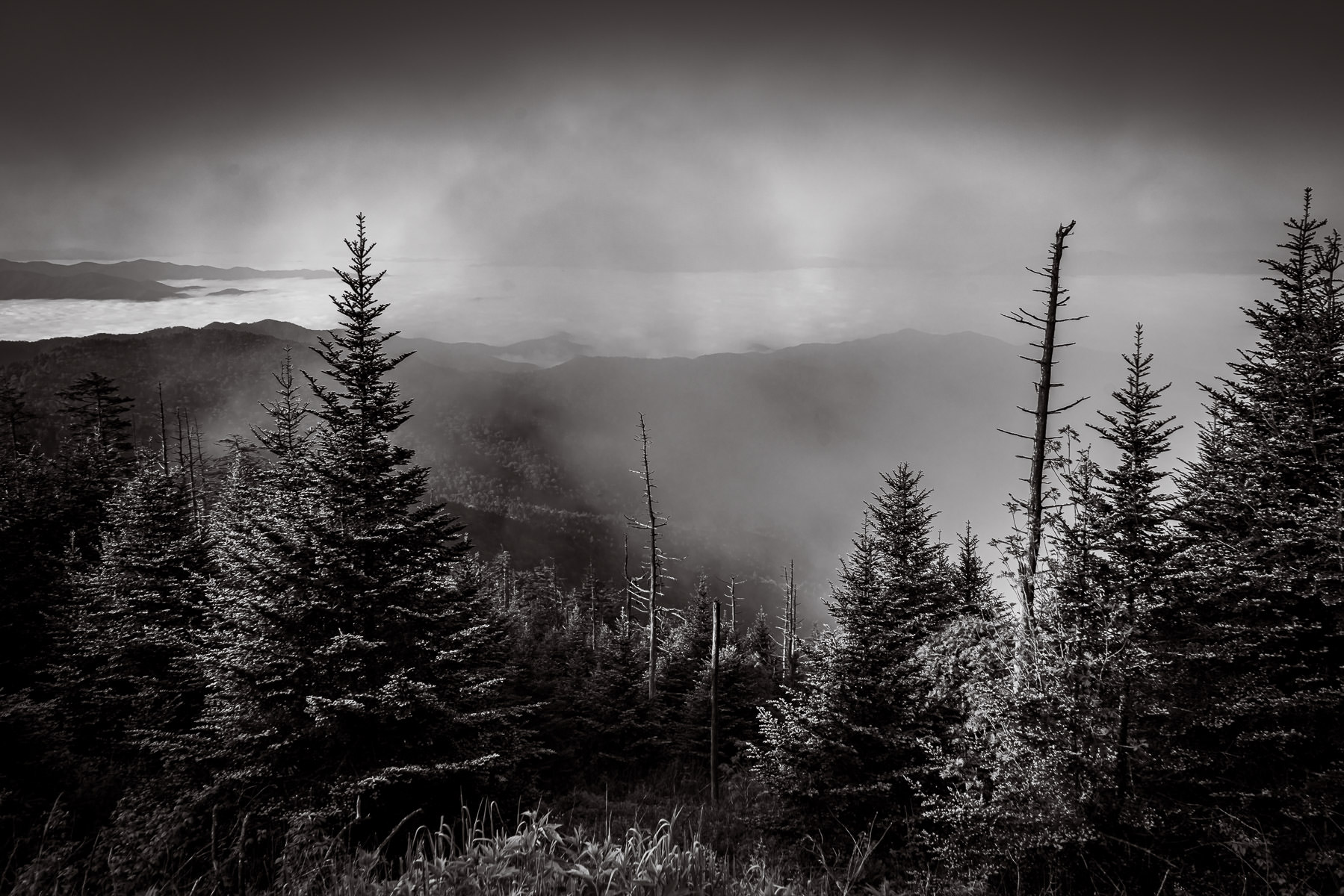 Trees in the morning fog at Clingmans Dome, Great Smoky Mountains National Park, Tennessee.