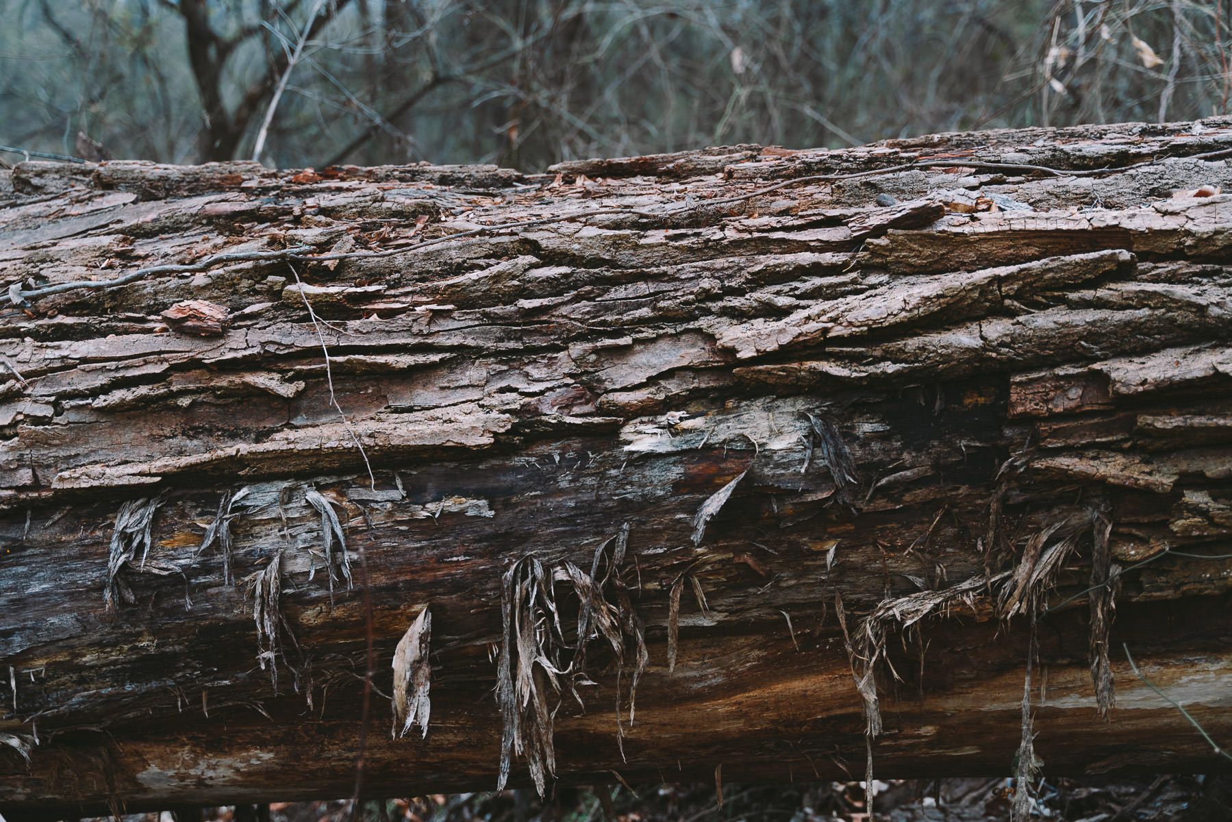 Detail of a fallen tree at the Lewisville Lake Environmental Learning Area, Texas.