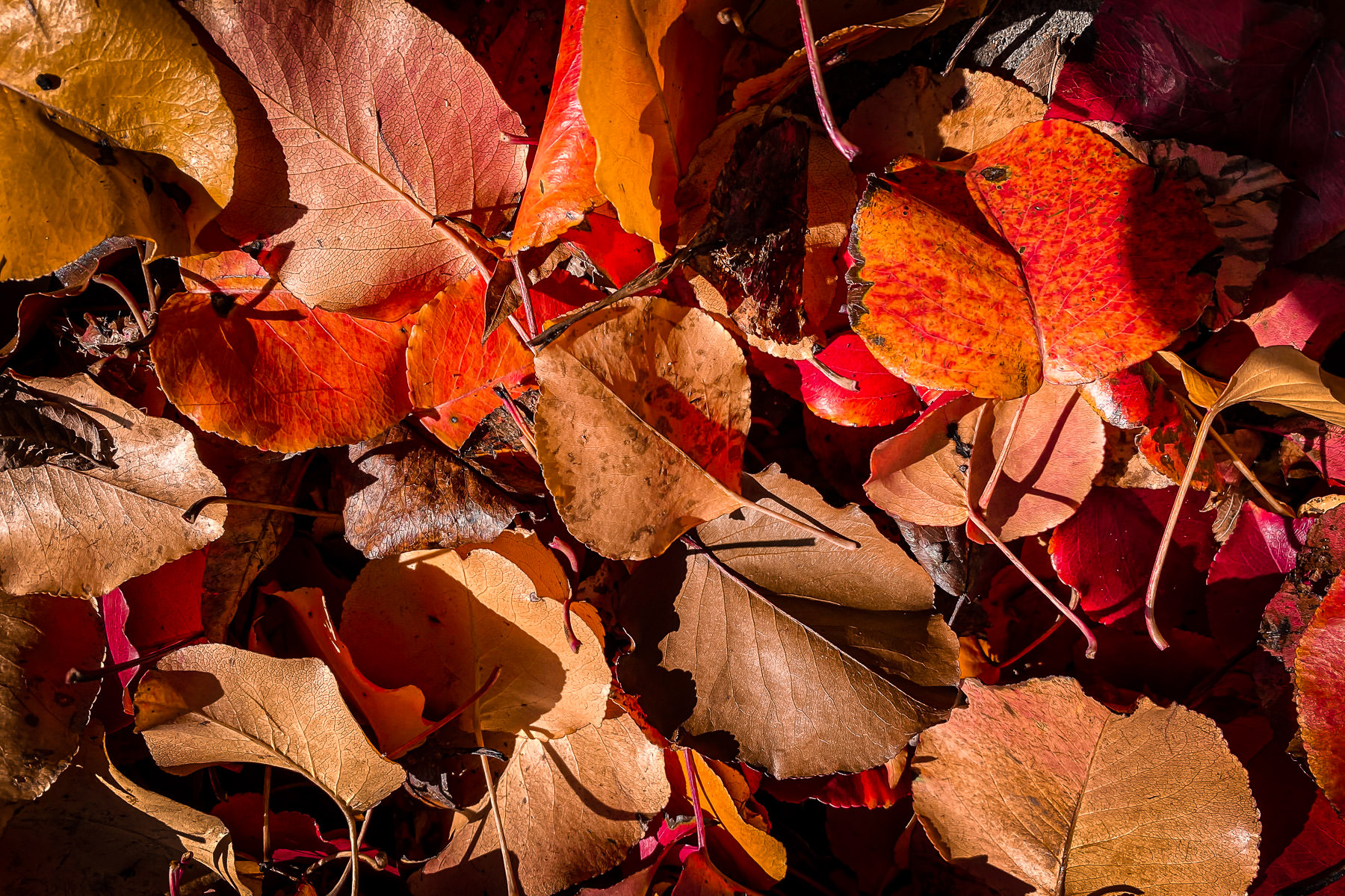 Fallen autumn leaves spotted in McKinney, Texas.