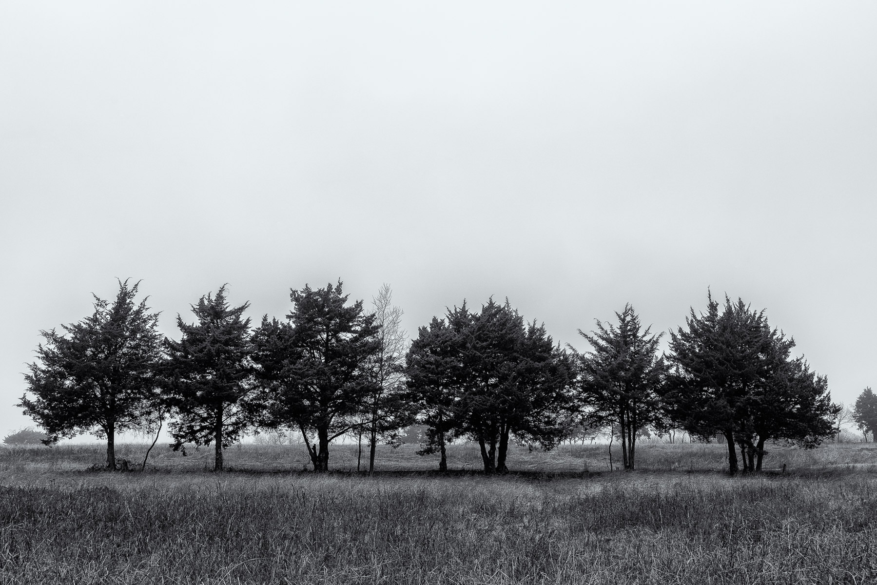 Trees in a field at McKinney, Texas' Erwin Park.
