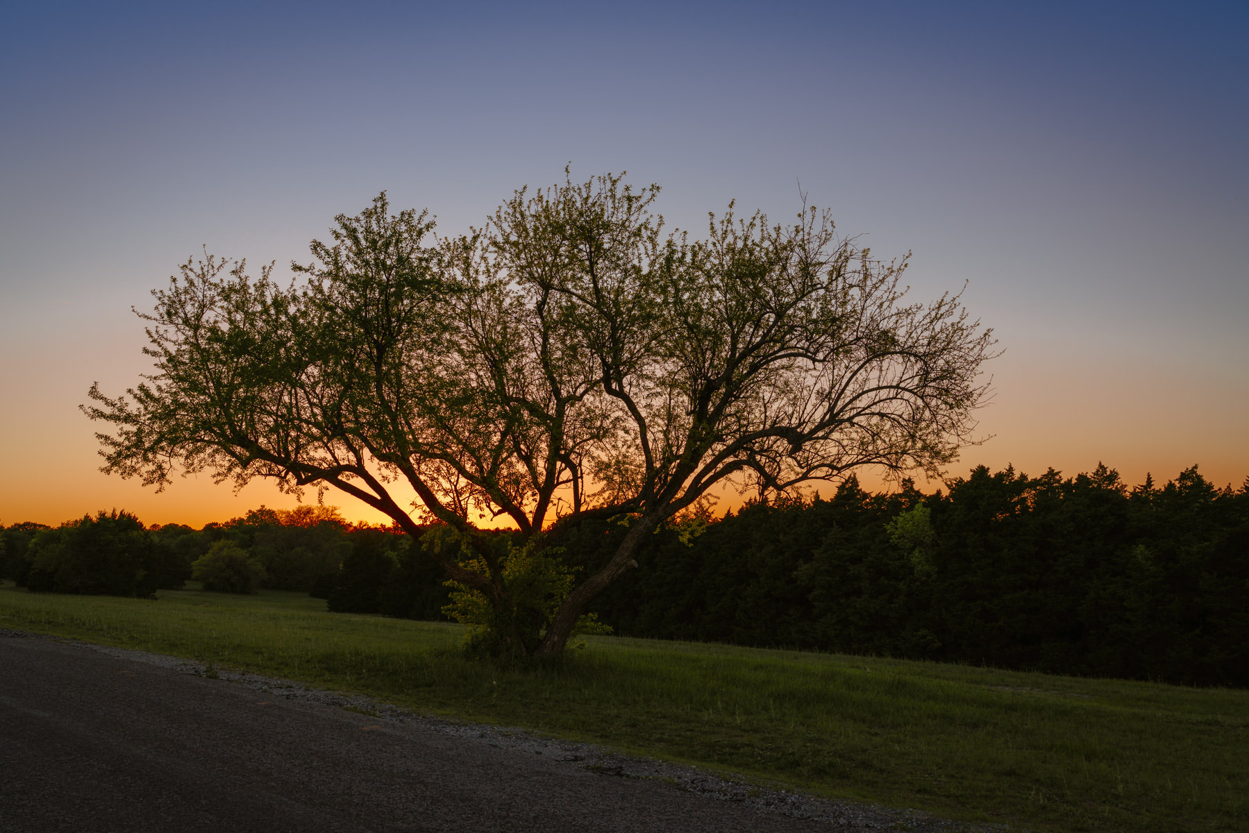 The sun sets on a tree in McKinney, Texas' Erwin Park.