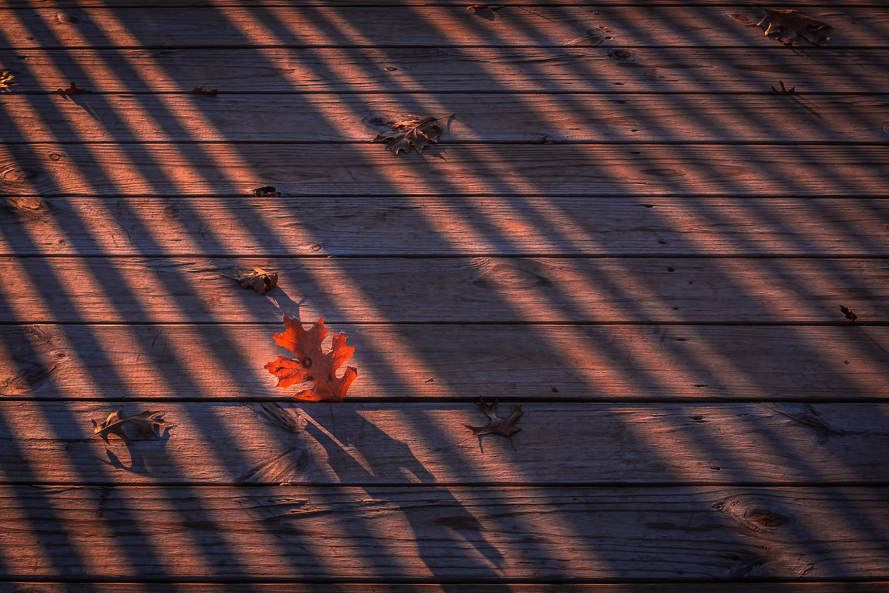 A leaf caught in a wooden boardwalk catches the last light of the day at Addison Circle Park, Addison, Texas.