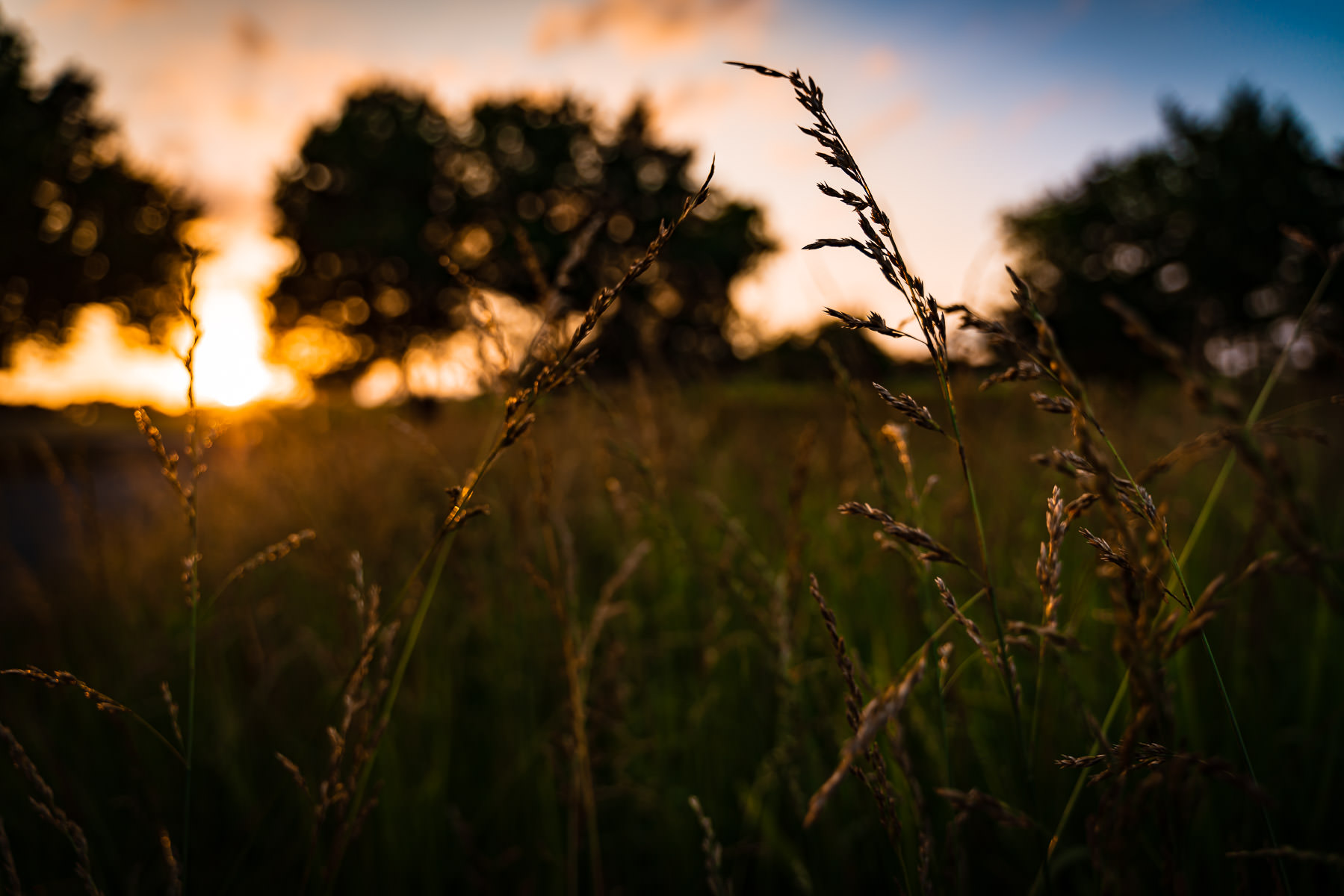 The sun sets on tall grass in a field at McKinney, Texas' Erwin Park.