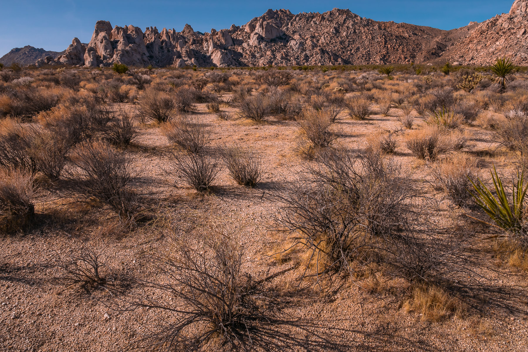 The dry desert landscape of California's Mojave National Preserve.