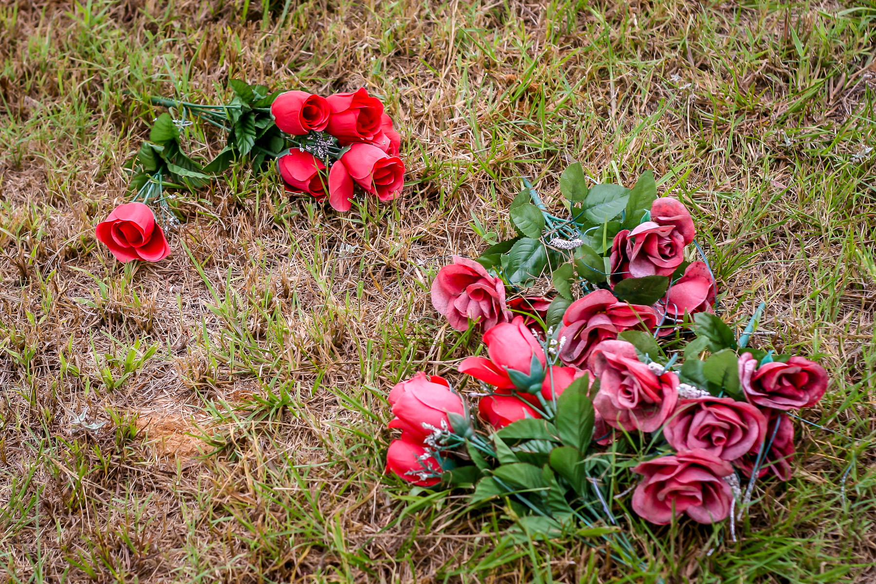 Fake roses strewn about Minter's Chapel Cemetery, DFW Airport, Texas.