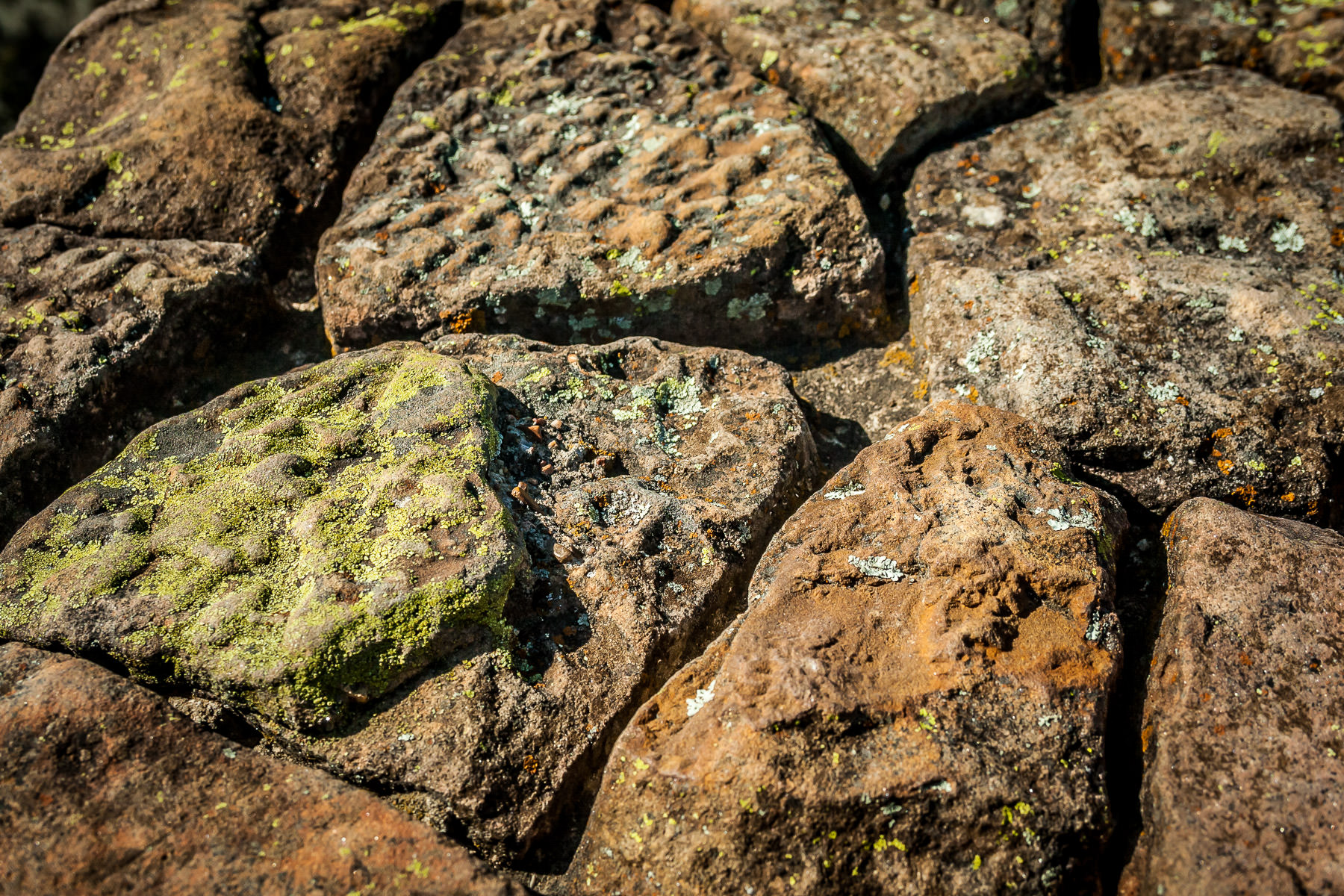 Detail of lichen-covered rocks at Lake Mineral Wells State Park, Texas.