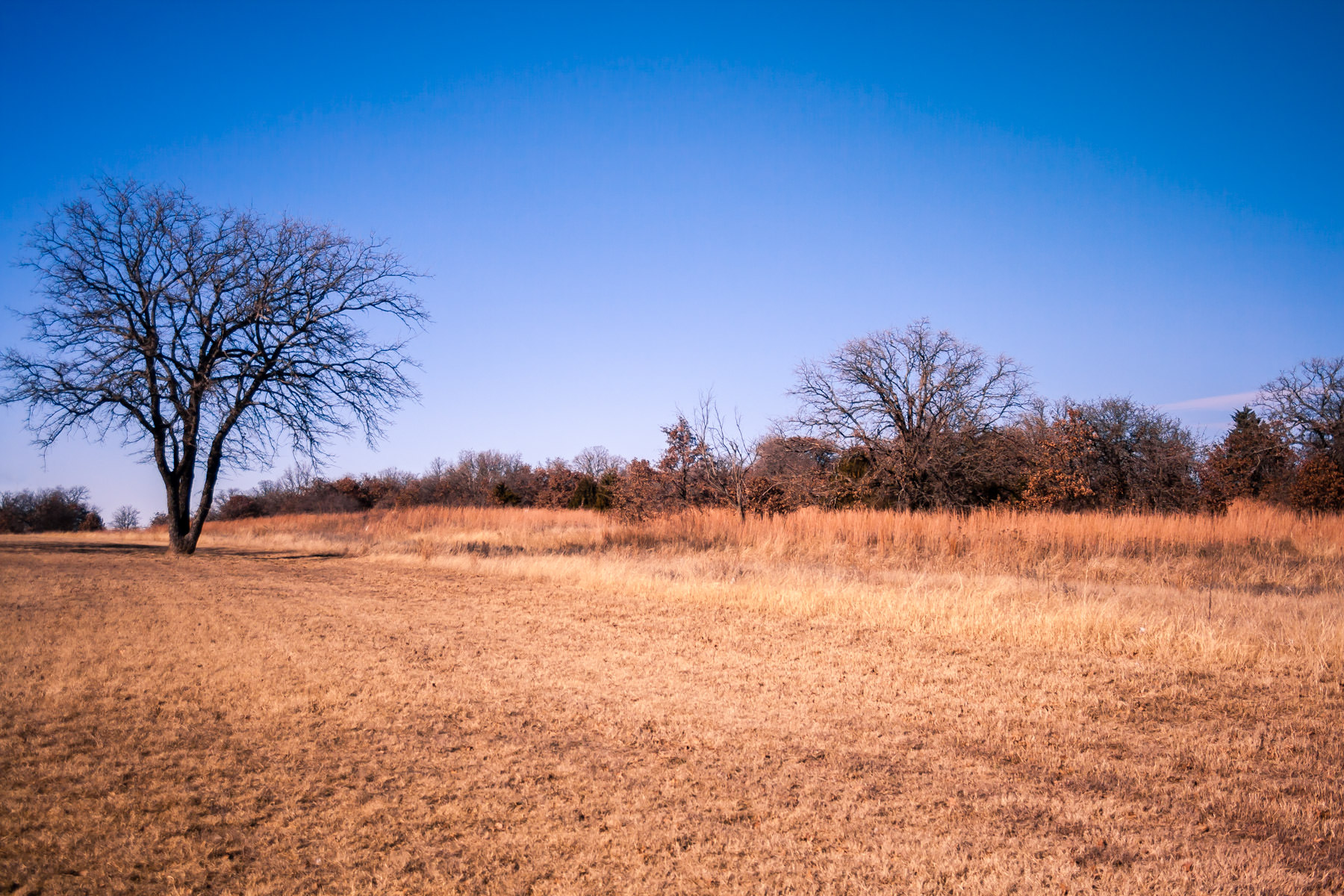Trees stripped of their leaves by the winter's cold somewhere northwest of Fort Worth, Texas.
