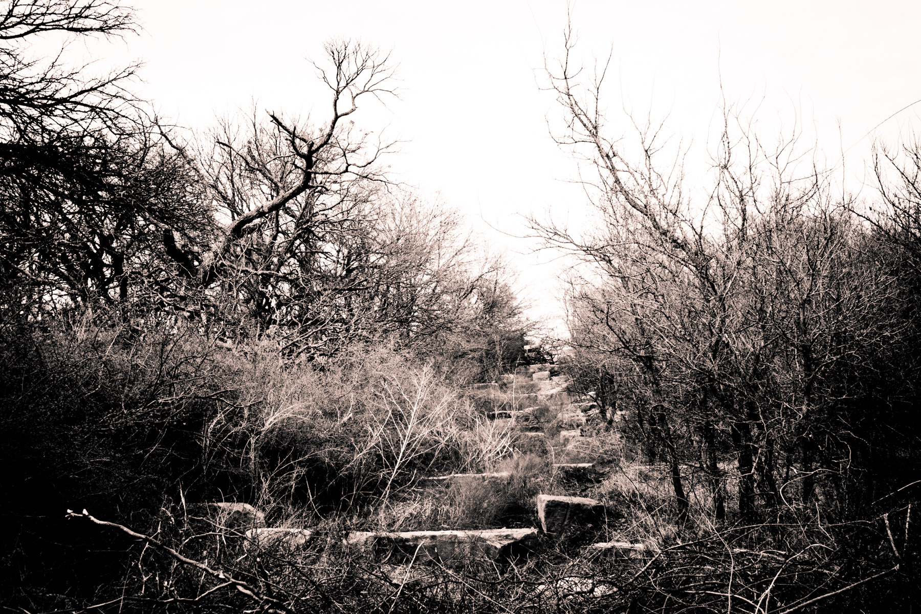 A rock-strewn pathway overgrown with grass and brush at Arbor Hills Nature Preserve in Plano, Texas.