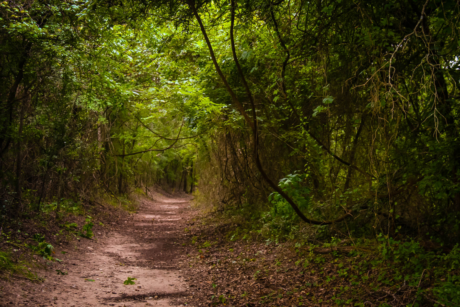 A somewhat-creepy path through the forest at Dinosaur Valley State Park, Texas.
