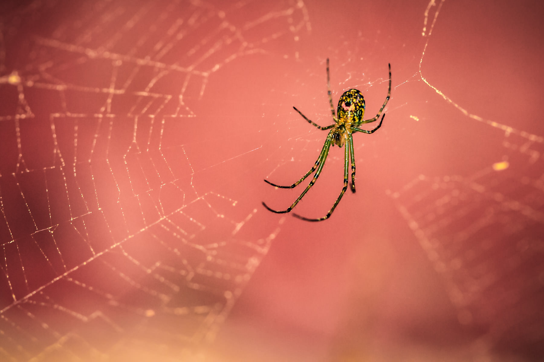 This spider sits in its web, awaiting prey to feast upon.