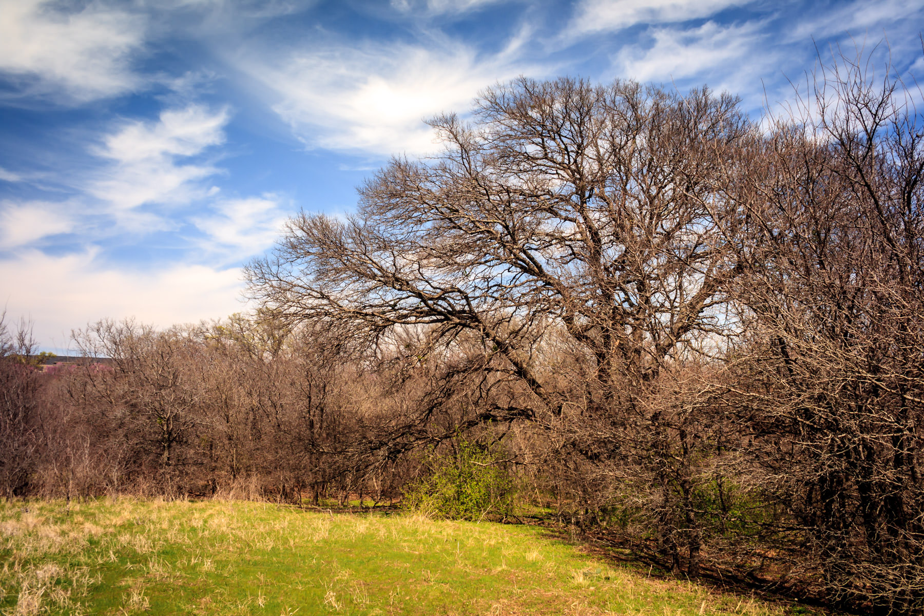 Trees on a ridge at Plano, Texas' Arbor Hills Nature Preserve.