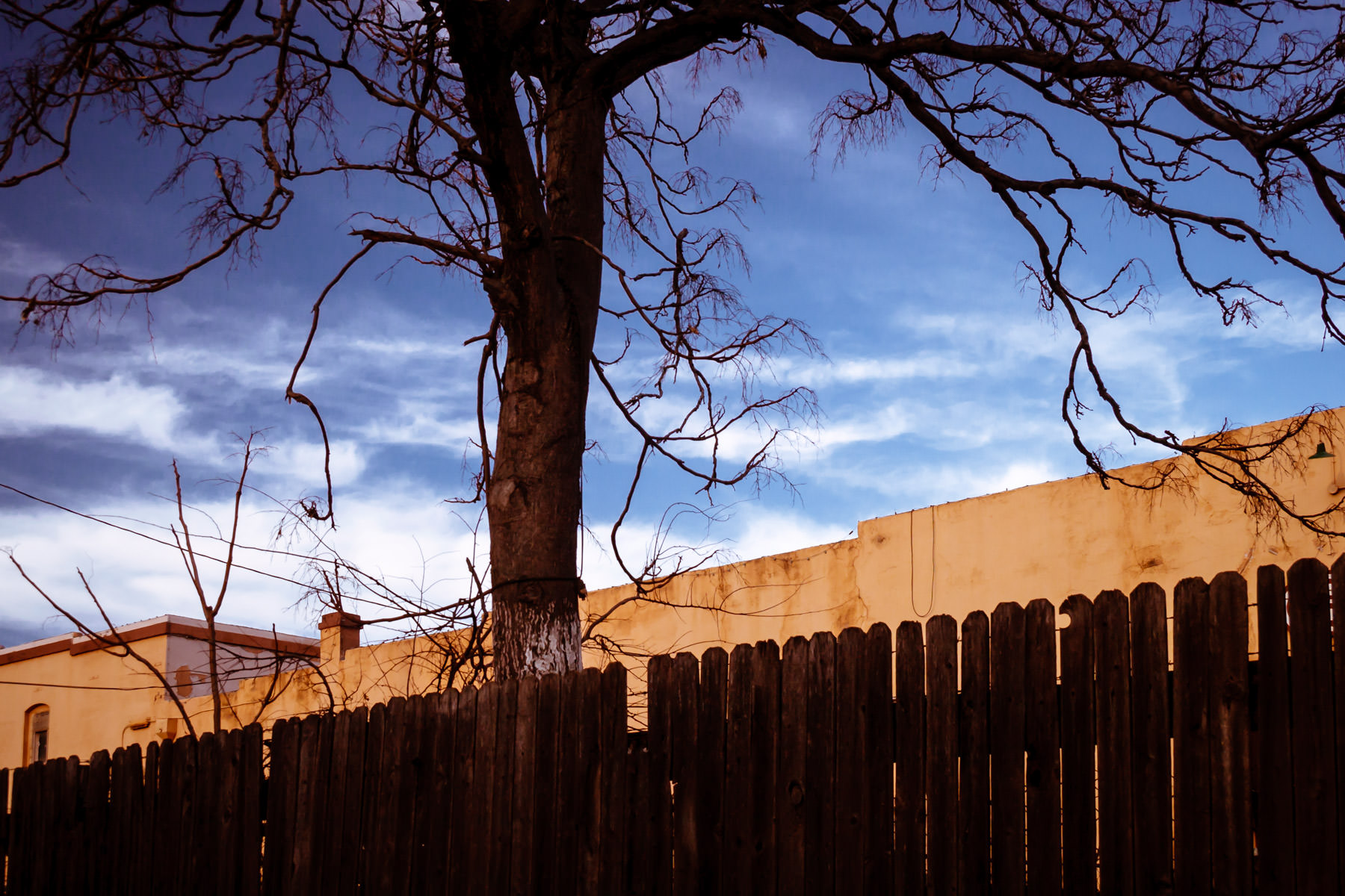A tree grows on the far side of a fence in Downtown Wichita Falls, Texas.