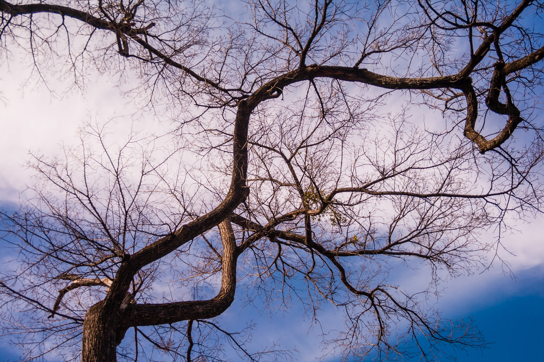 Branches of a tree carve the sky over Allen, TX.