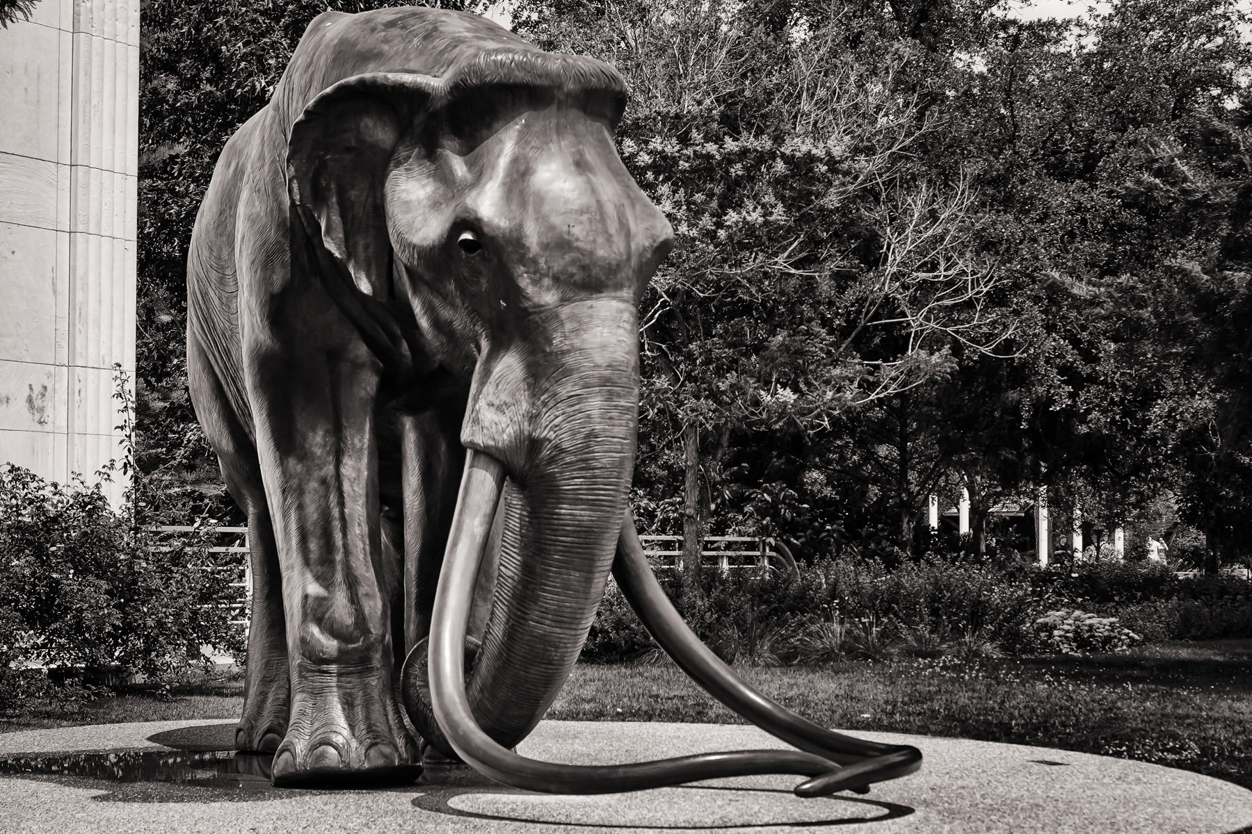 A bronze mammoth statue at the Dallas Museum of Nature and Science.