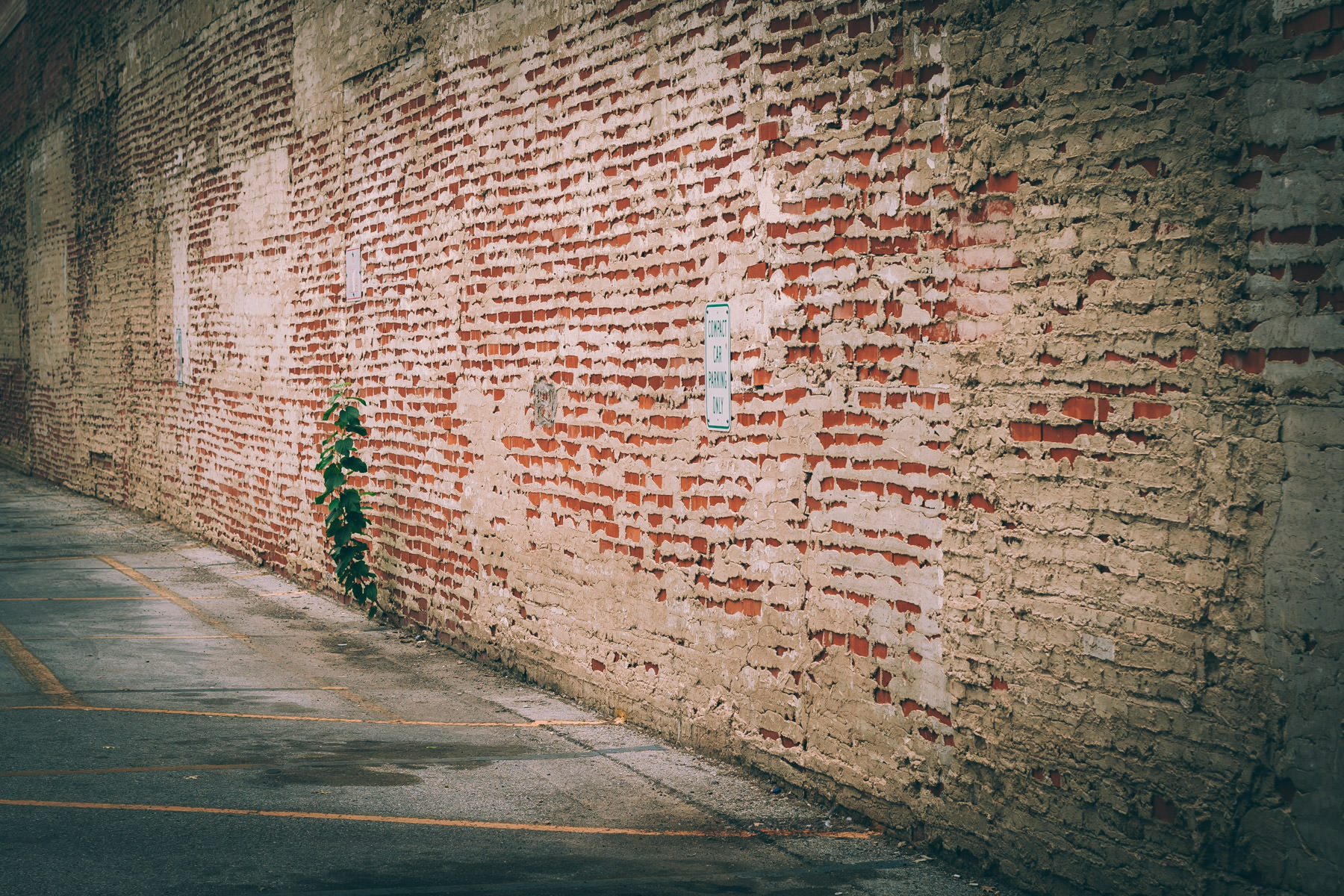 An old brick wall in Fort Worth, Texas.