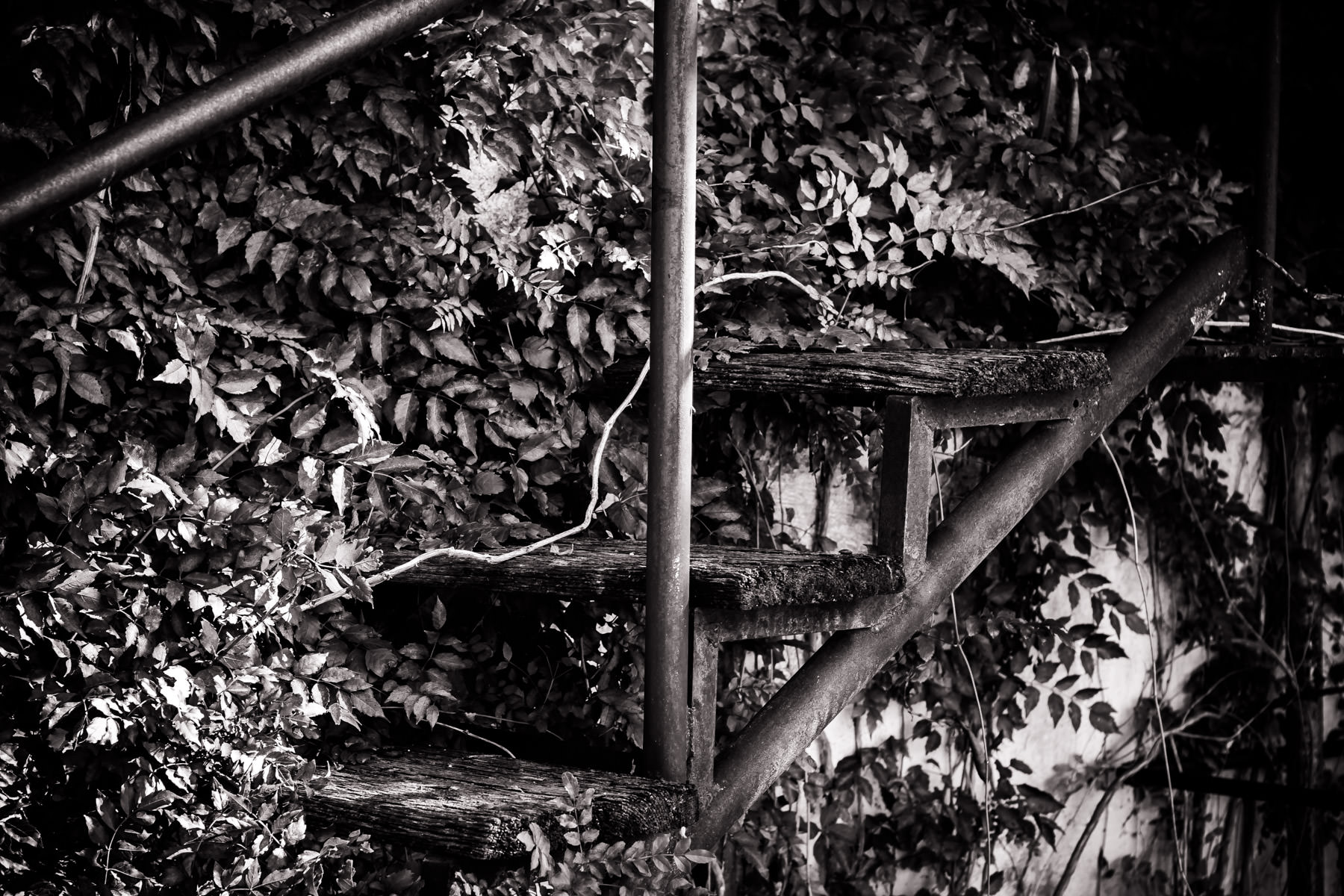 Vines grow over a staircase in Downtown Pilot Point, Texas.