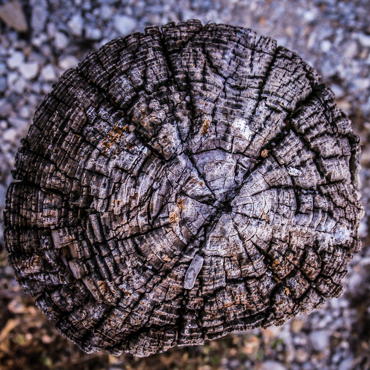A wooden stump used as a parking barrier at White Rock Lake Park, Dallas, as seen from above.