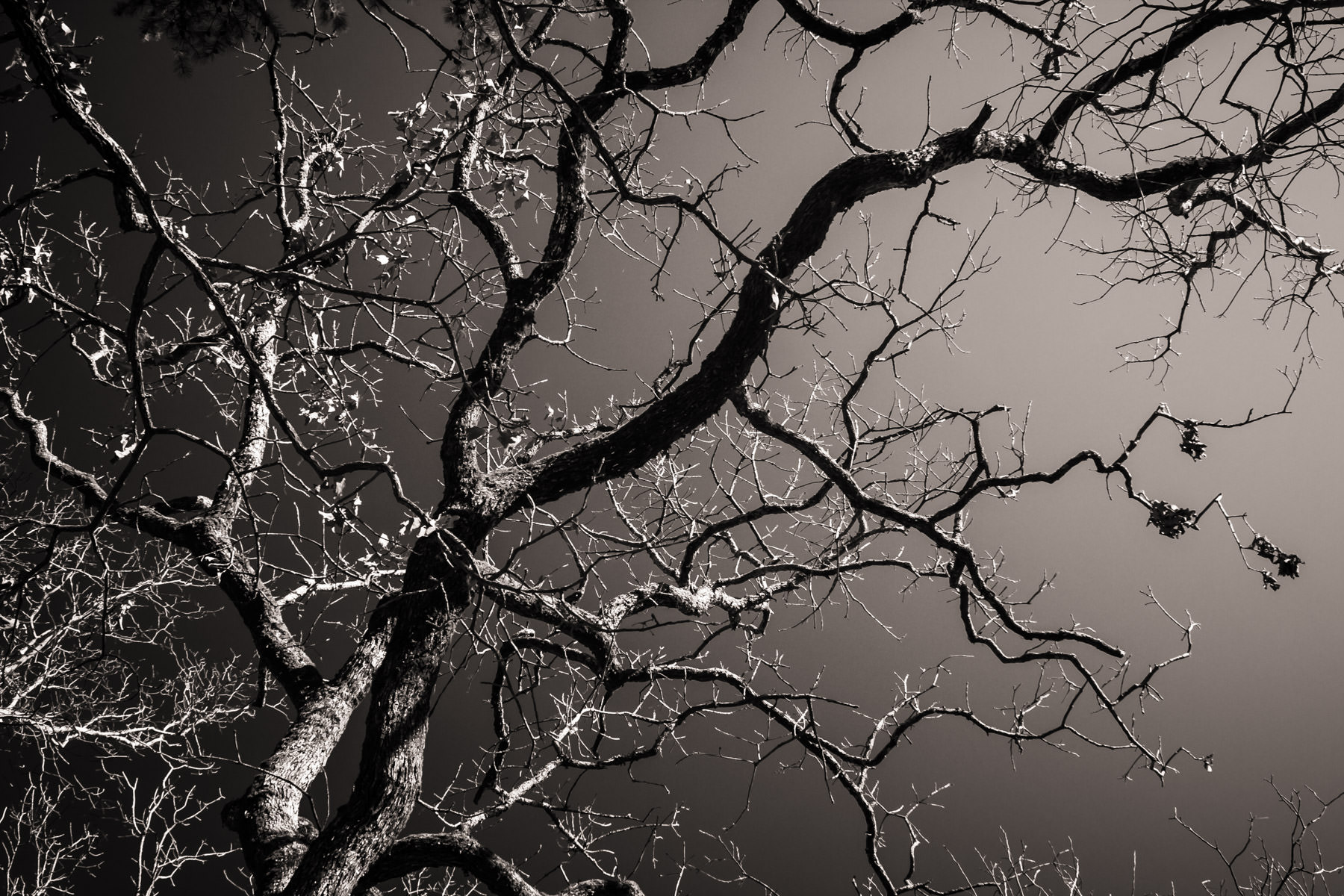 Tree branches devoid of leaves arch across the featureless sky over Hot Springs, Arkansas.